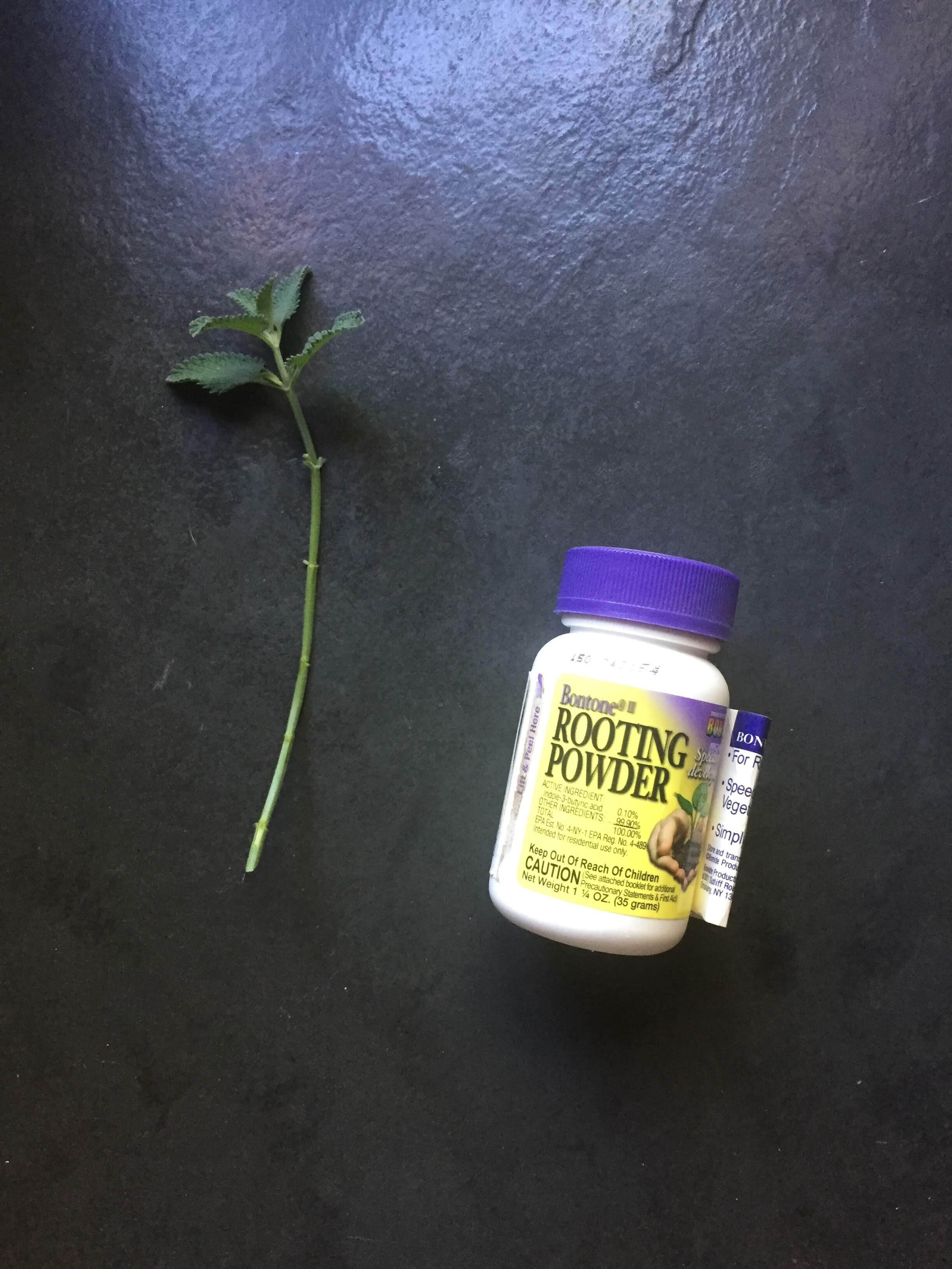 This is the rooting hormone that I use. Note that I trimmed up the length of the cutting so that it will fit under a humidity dome if I need to add a little bit of extra humidity.