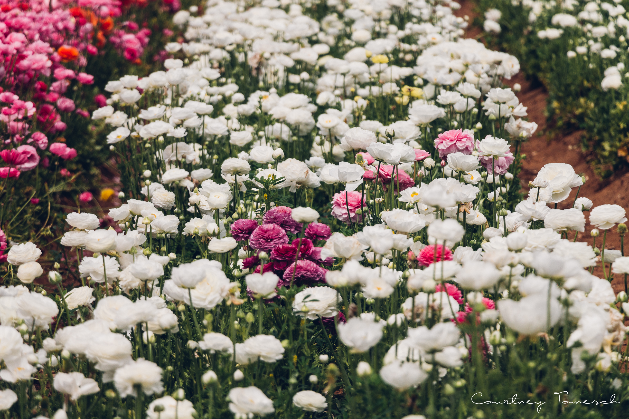 FlowerField_52.jpg