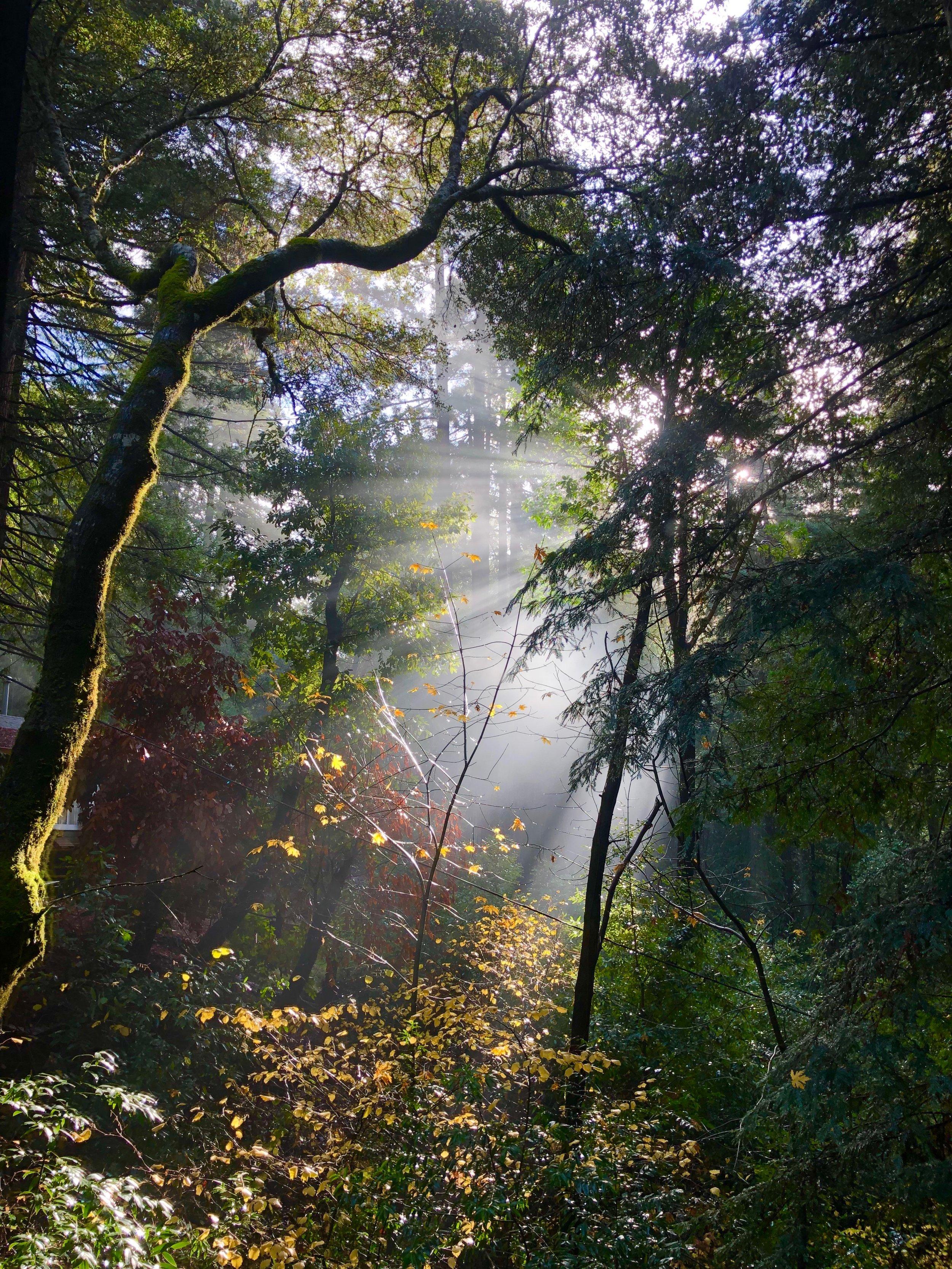"""photo credit: """"Morning Has Broken"""" by Rev. Alex da Silva Souto, California, USA."""