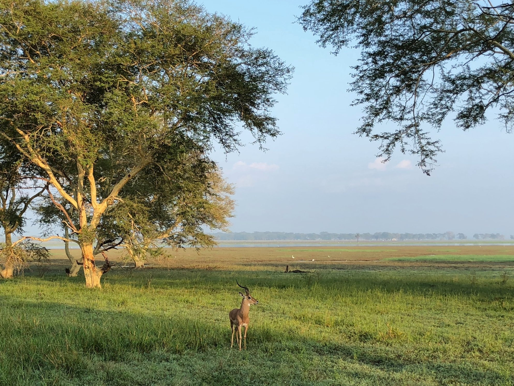 "photo credit: ""Pray"" by Rev. Alex da Silva Souto,  Parque Nacional da Gorongosa , Moçambique."