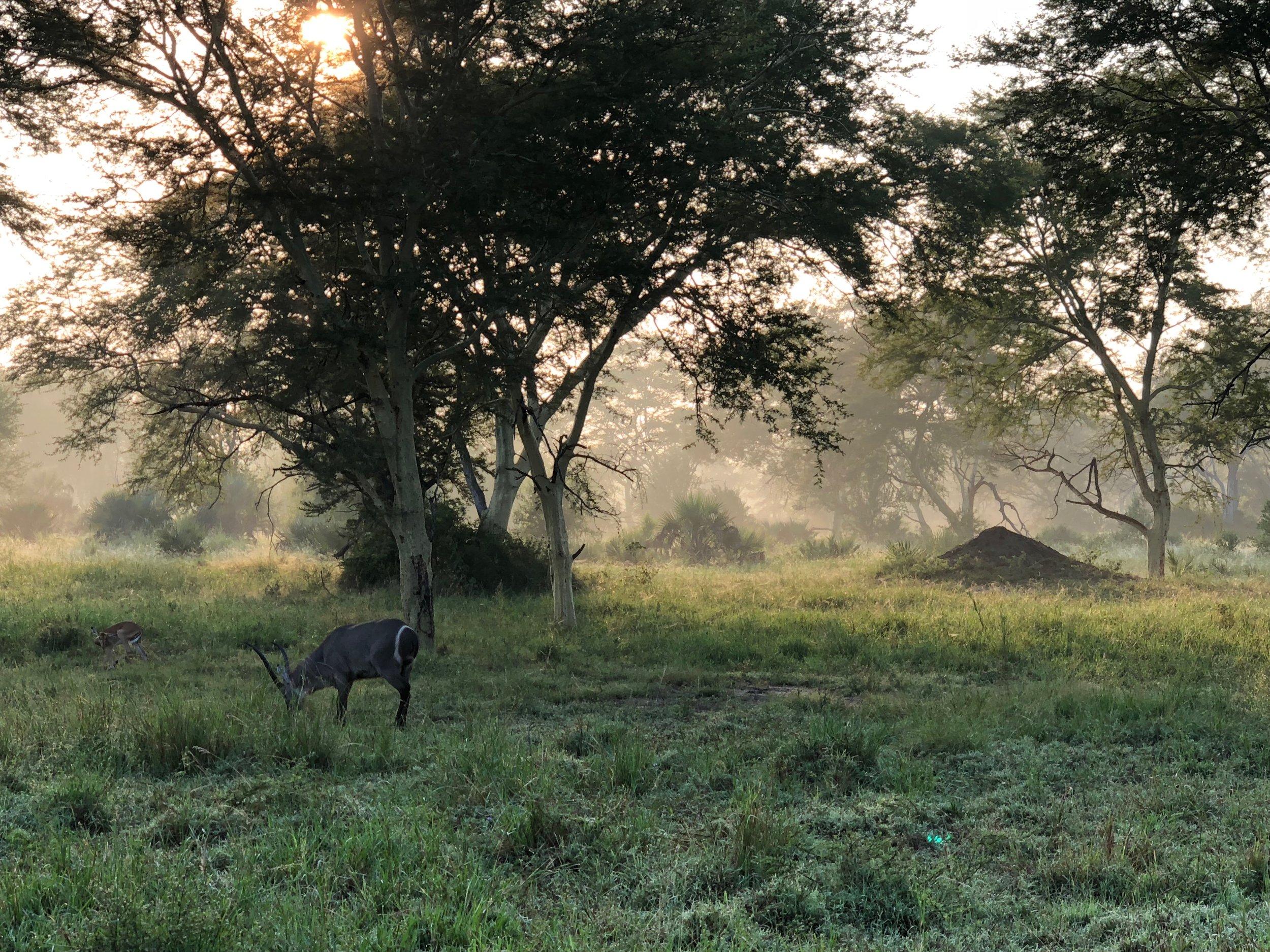 """photo credit: """"Hunger Games"""" by Rev. Alex da Silva Souto,  Parque Nacional da Gorongosa , Moçambique."""