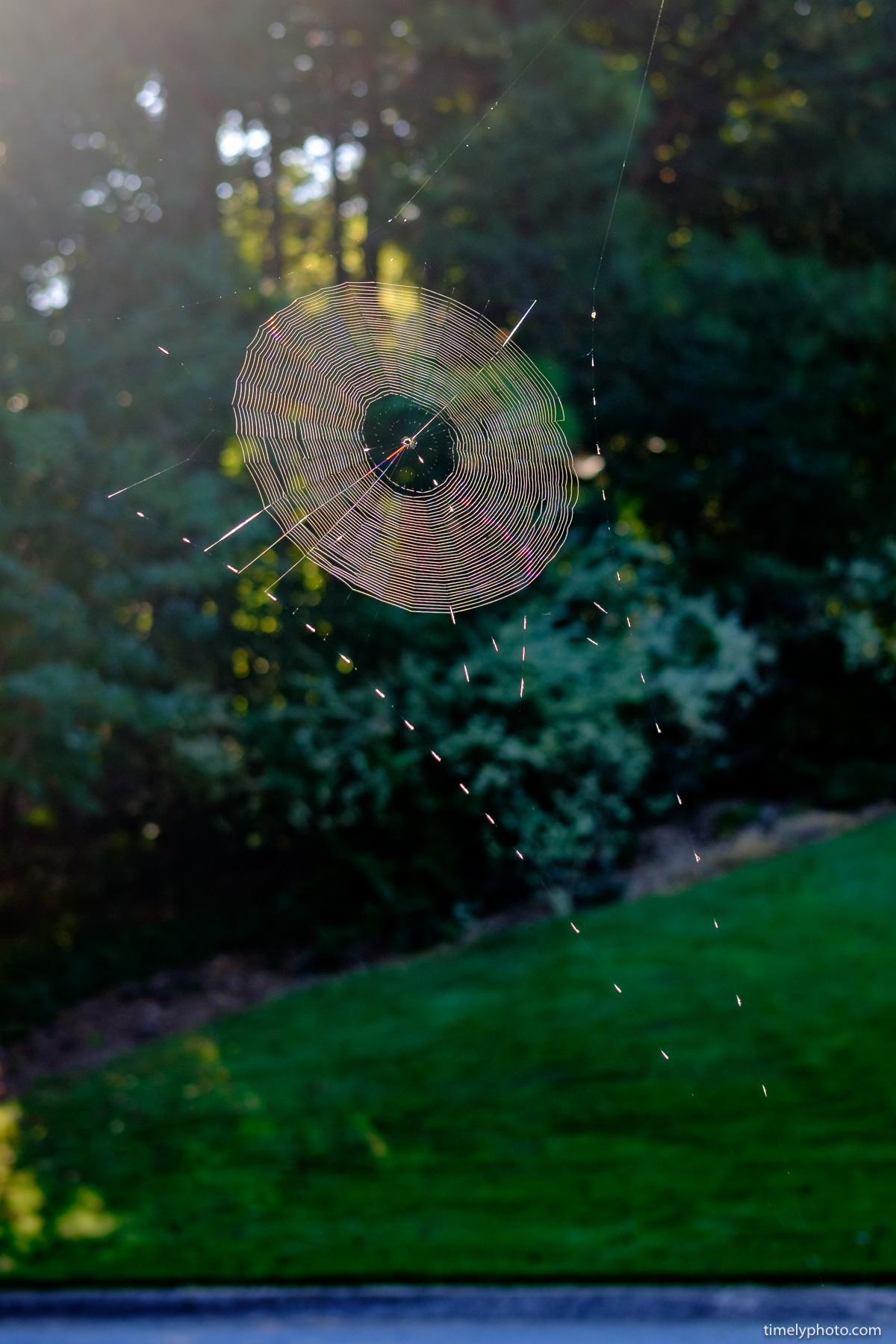 Spider Web. Shot at 200 ISO | 35mm | f/2.8 | 1/250/sec on Fujifilm X-T2