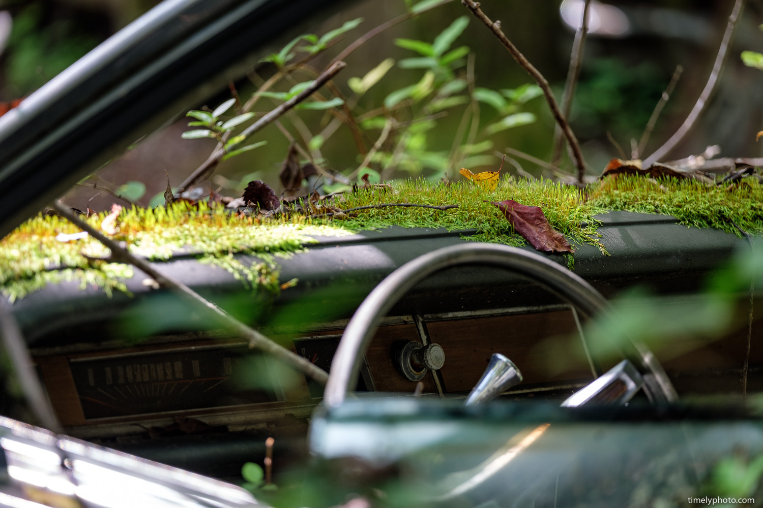 Moss Dash. Part of the Americana series by Chris Lee
