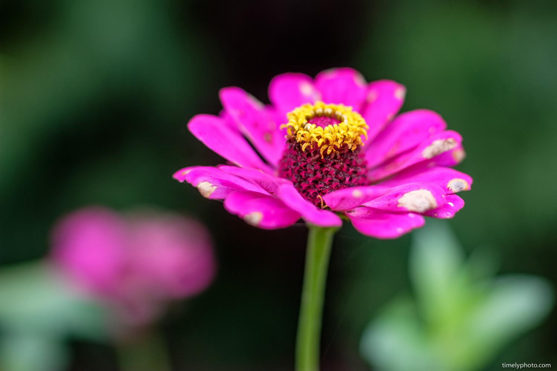 Late morning flower. ISO 200 | 50mm | f/1.0 | 1/1000sec