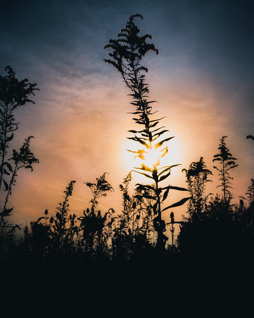 Plant1080.jpg