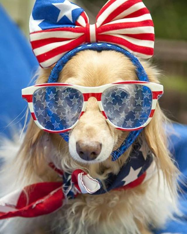 Happy almost 4th of July! We wanted to let all of our clients know that we will be closed July 4th and 5th and will re-open July 8th. Have fun, be safe, and enjoy the sunshine ☀️ #frontierveterinaryclinic #SwartzCreek