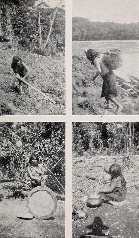 Amazonian women preparing manioc beer . Ca. 1901. By Smithsonian Institution. Bureau of American Ethnology - https://www.flickr.com/photos/internetarchivebookimages/19799573794/