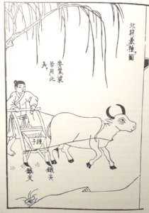 Sowing wheat or millet in North China using a seed-drill;  Tiangong kaiwu  (Exploitation of the Works of Nature), Song Yingxing, 1637.