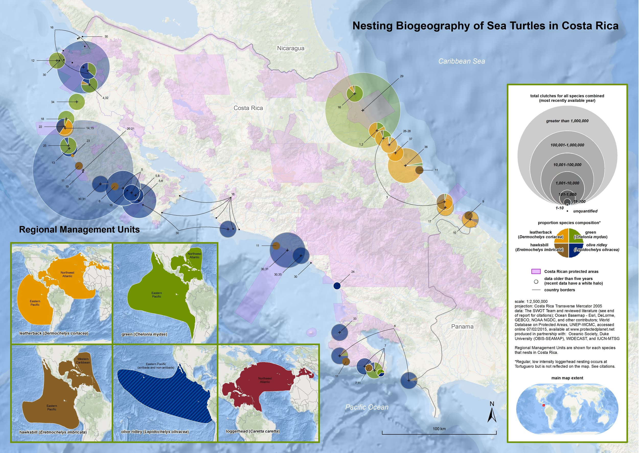 The first comprehensive map of sea turtle nesting biogeography in Costa Rica, produced in collaboration with dozens of individuals and organizations. The map features nesting data from 60 beaches on both the Pacific and Caribbean coasts, covering four species: green, leatherback, hawksbill, and olive ridley. While loggerhead turtles have also been recorded nesting at Tortuguero on the Caribbean coast, they were omitted from the map because their presence is considered sporadic. We have also included Costa Rican protected areas on the map in order to highlight the protection afforded to many key sea turtle nesting sites, as well as to draw attention to current gaps in protection; these are discussed in greater detail throughout this article. The data used to create the map were provided voluntarily to SWOT or sourced from literature and come from approximately 40 sources. Each data point is numbered to correspond with a record that includes detailed metadata and source information.  Click here  to see the complete map citations and data sources.