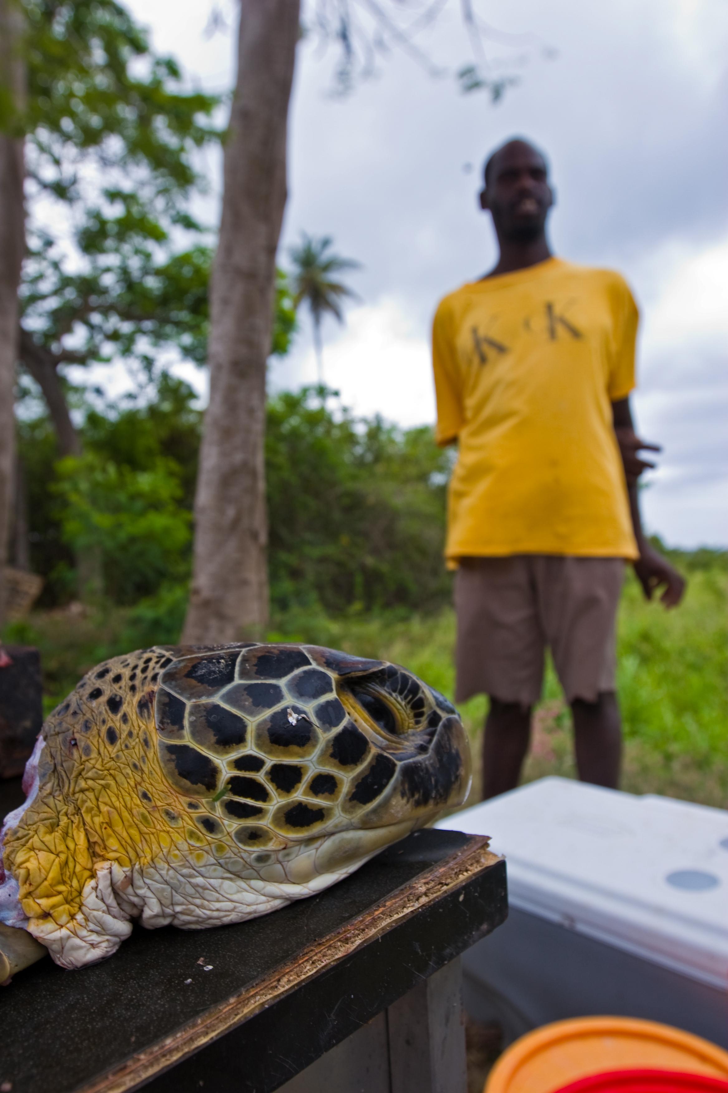 A butchered green turtle for sale in Grenada. © Brian J. Hutchinson