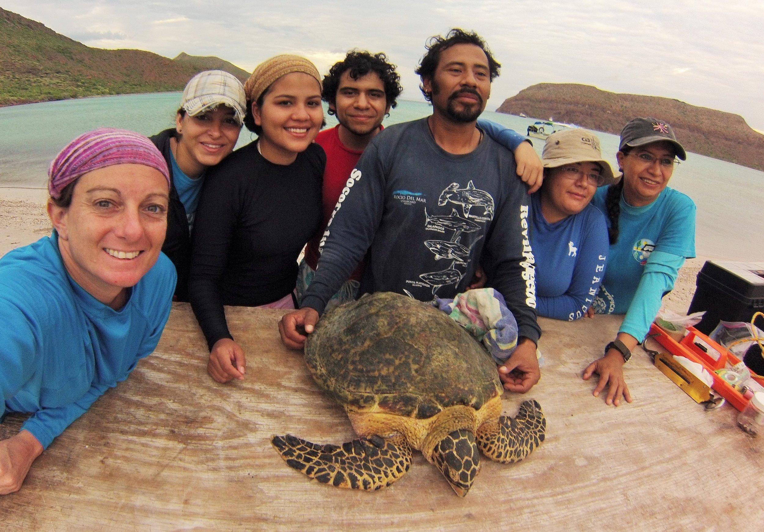 SWOT grantees with a hawksbill turtle in Baja California, Mexico. © ProFauna Baja