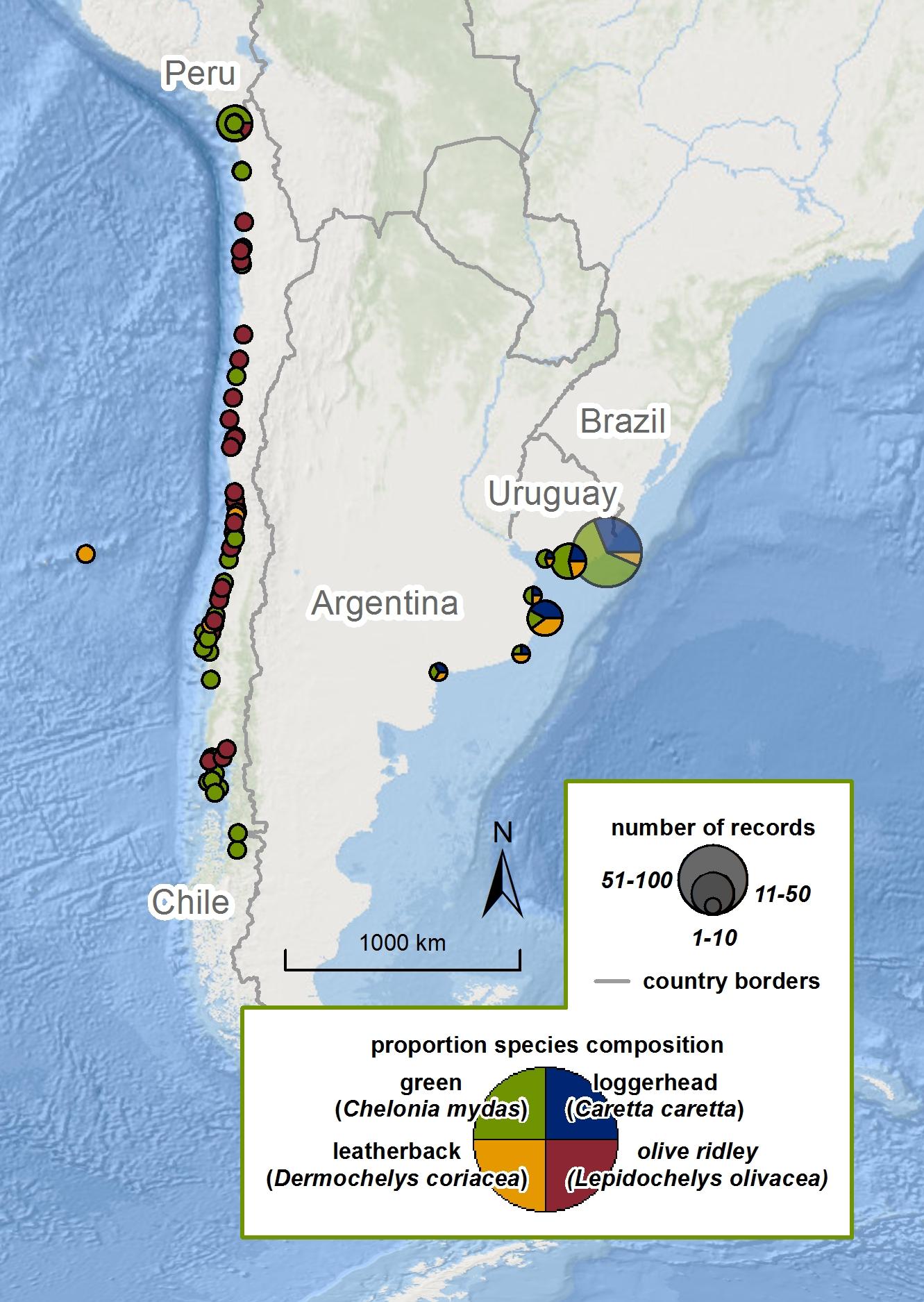 Strandings in South America |   SWOT Report , vol. XI (2016) .