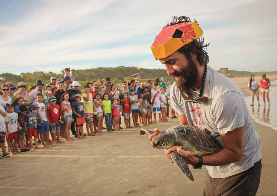 A rehabilitated green turtle is released to the sea after recovering at one of Karumbé's rehabilitation facilities. © RUTA TORTUGUERA
