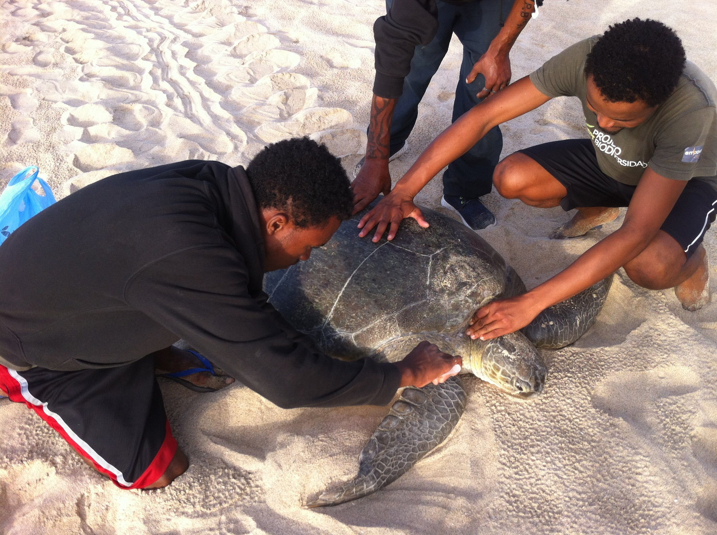 Field researchers tag a green turtle in Cabo Verde. © Projeto Biodiversidade