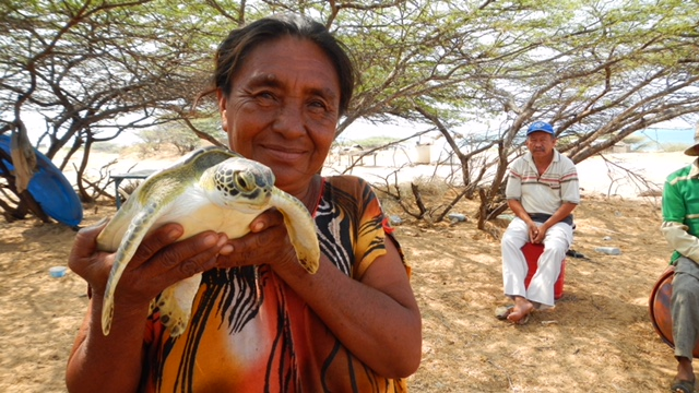 Wayuu community leader Teresa Fernandez from the Urariyu clan poses with a green turtle that she and her family rescued on the Guajira Peninsula. © PATRICIA VITALE / VERDE SALVA