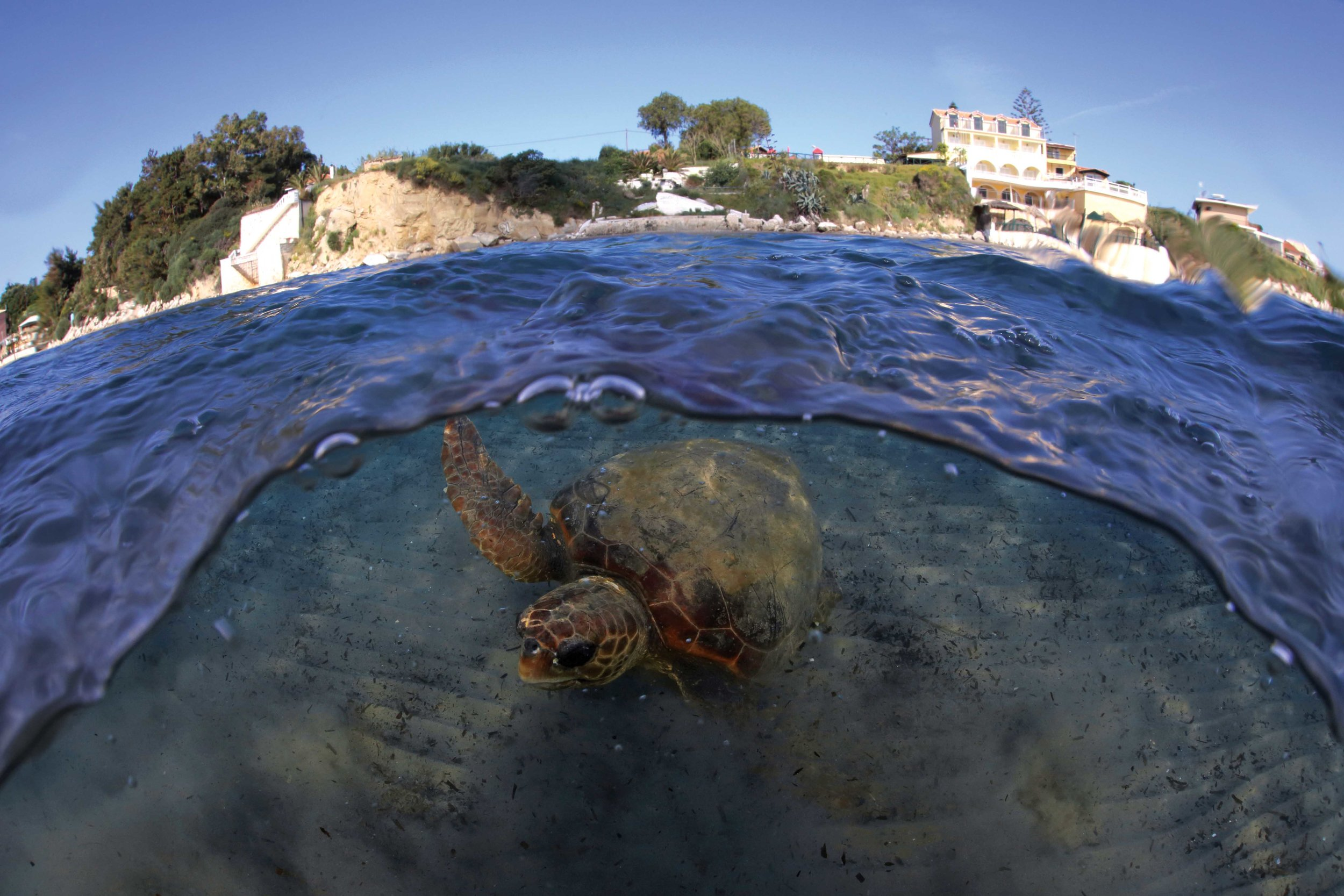 A loggerhead turtle swims near seaside homes on the coast of Greece. With more than 150 million coastal residents and one of the world's highest levels of tourism, the Mediterranean Sea is an environment profoundly shaped by people. © KOSTAS PAPAFITSOROS