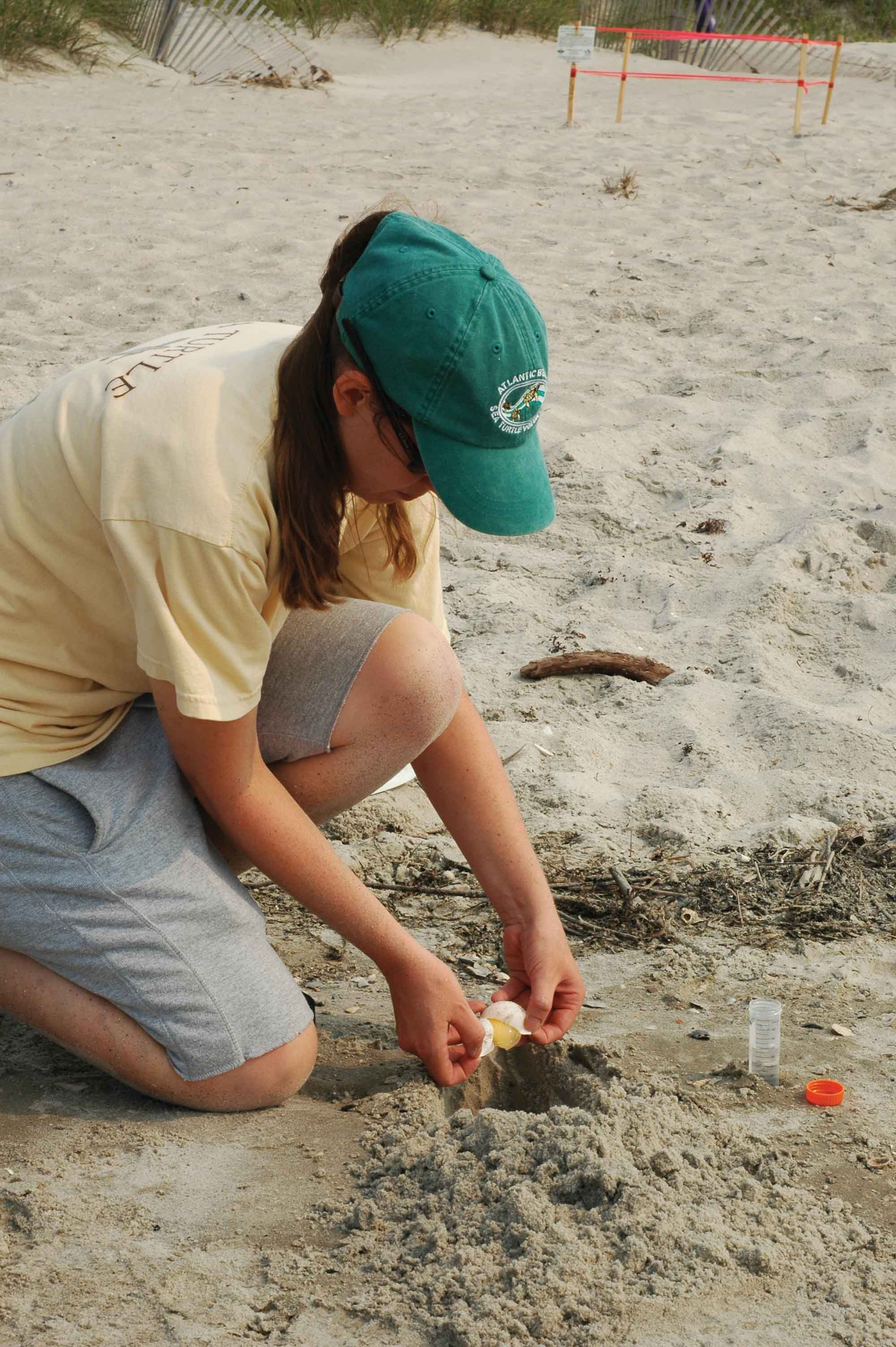 A researcher collects an eggshell for genetic analysis to identify the individual turtle that laid the eggs. © MATTHEW GODFREY / NCWRC