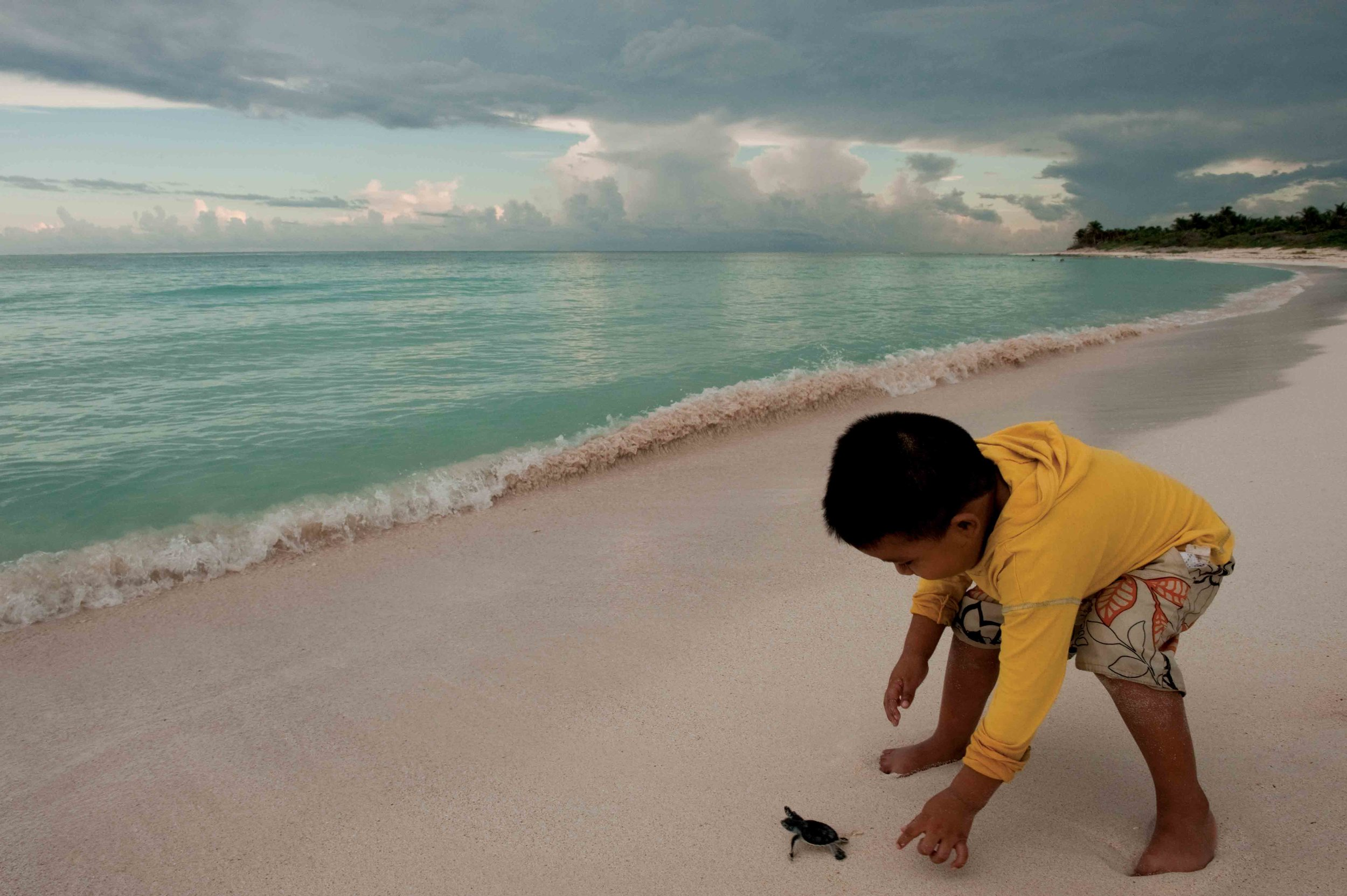 A boy releases a hatchling green turtle as part of a sea turtle festival in Quintana Roo, Mexico. © PETE OXFORD / ILCP