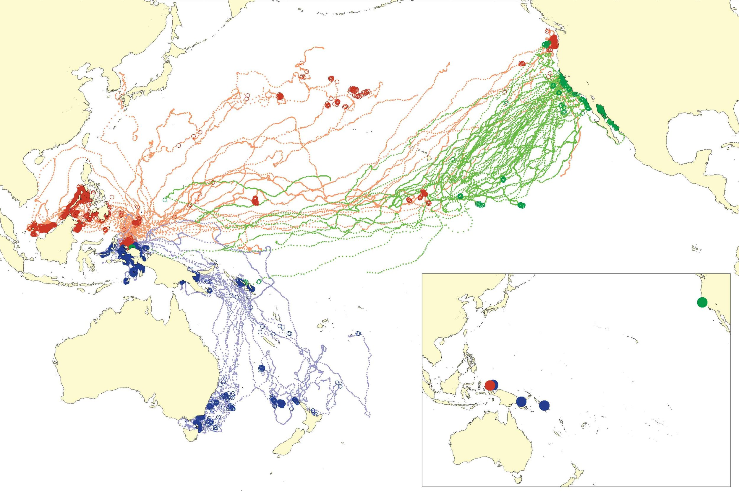 Satellite tracks of western Pacific leatherback turtles showing feeding areas (large, darker circles) and migrations (small, lighter circles). Track colors indicate deployment season: red = summer nesters, blue = winter nesters, green = deployments at central California foraging grounds. Inset shows deployment locations; PBI = Papua Barat, Indonesia; PNG = Papua New Guinea; SI = Solomon Islands; CCA = central California.