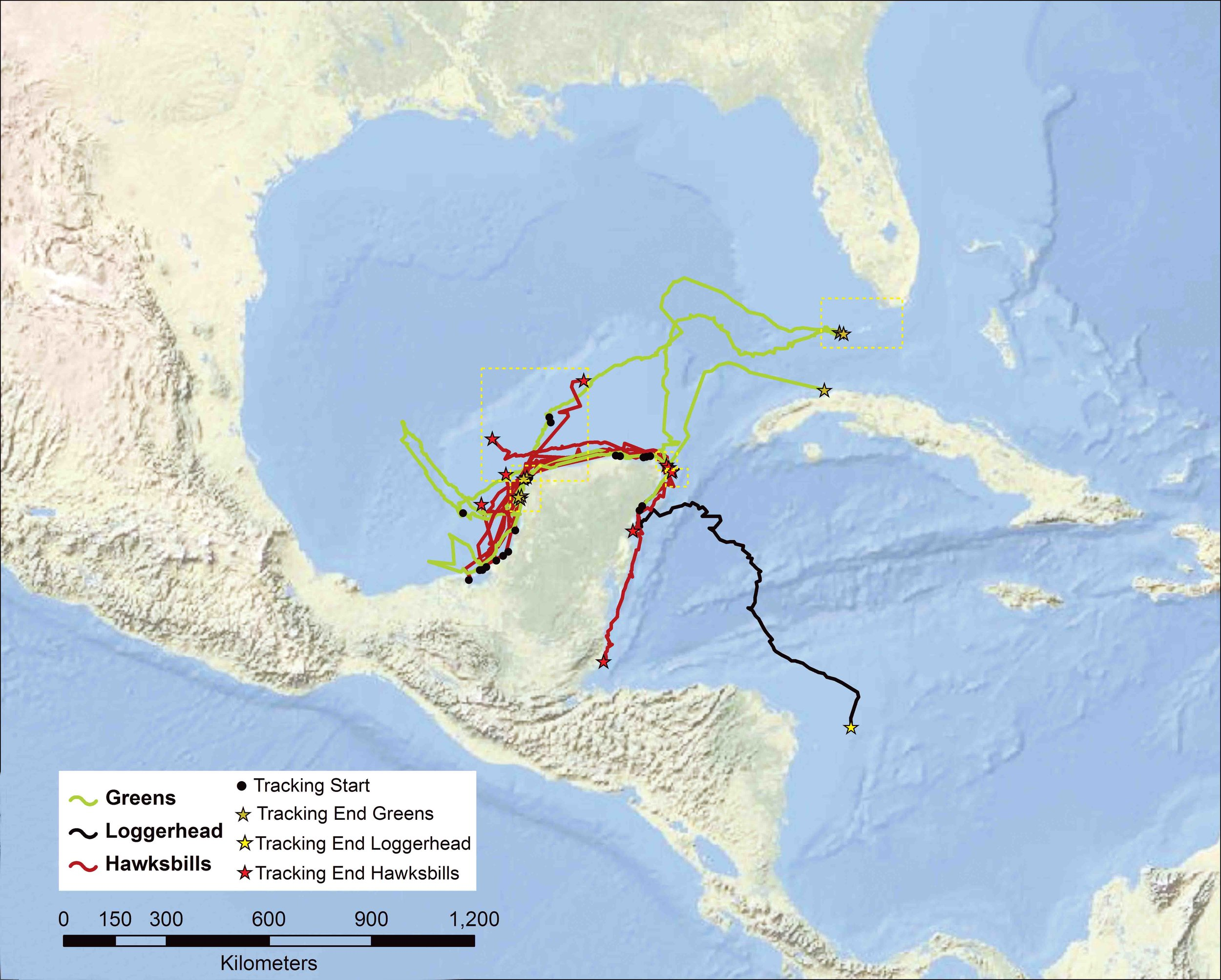 Sea turtle movements from nesting sites on the Yucatán peninsula, Mexico. Main map shows tracks of hawksbills, green turtles, and a loggerhead. Inset maps show core habitats used by hawksbills (A and B) and green turtles (C, D, and E). AT LEFT: Green turtle hatchlings race to the sea on Mexico's Yucatán peninsula. © Claudio Contreras