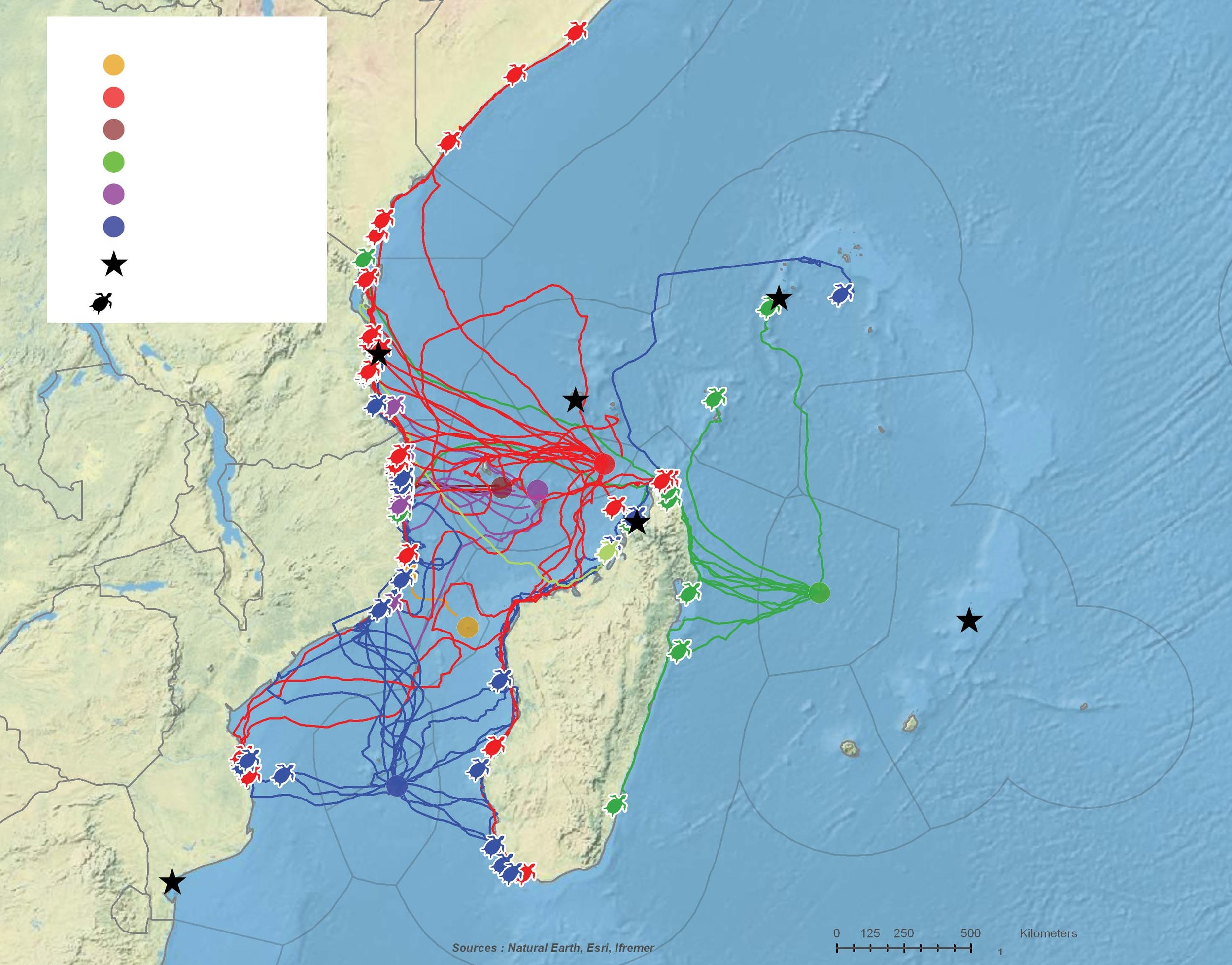Movements and feeding sites of 64 green turtles tracked after nesting throughout the Southwest Indian Ocean. Track colors correspond to the tag deployment sites, which are shown as colored dots. Black stars represent future deployment sites.