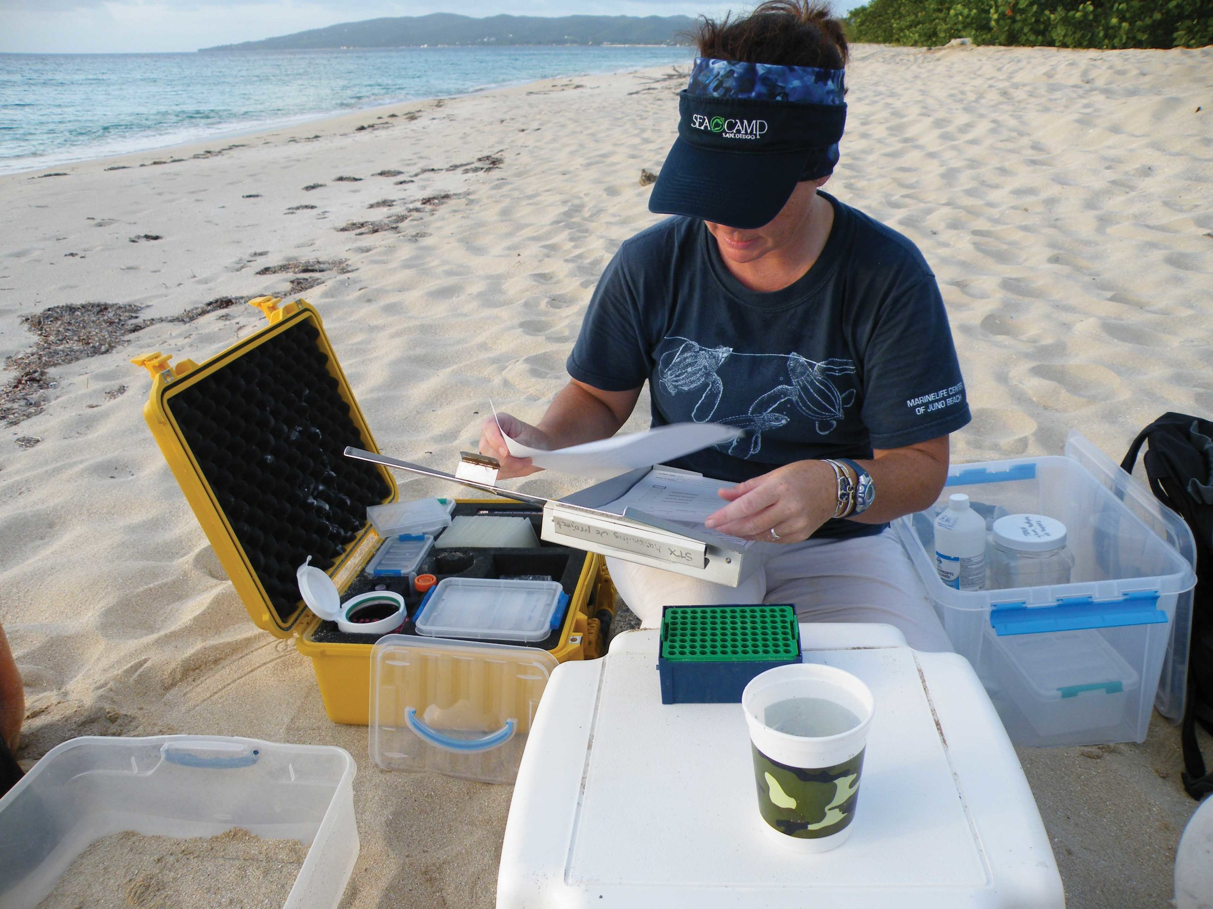 A researcher organizes DNA samples collected on the beach in St. Croix, U.S. Virgin Islands. © Jeremy W. Smith