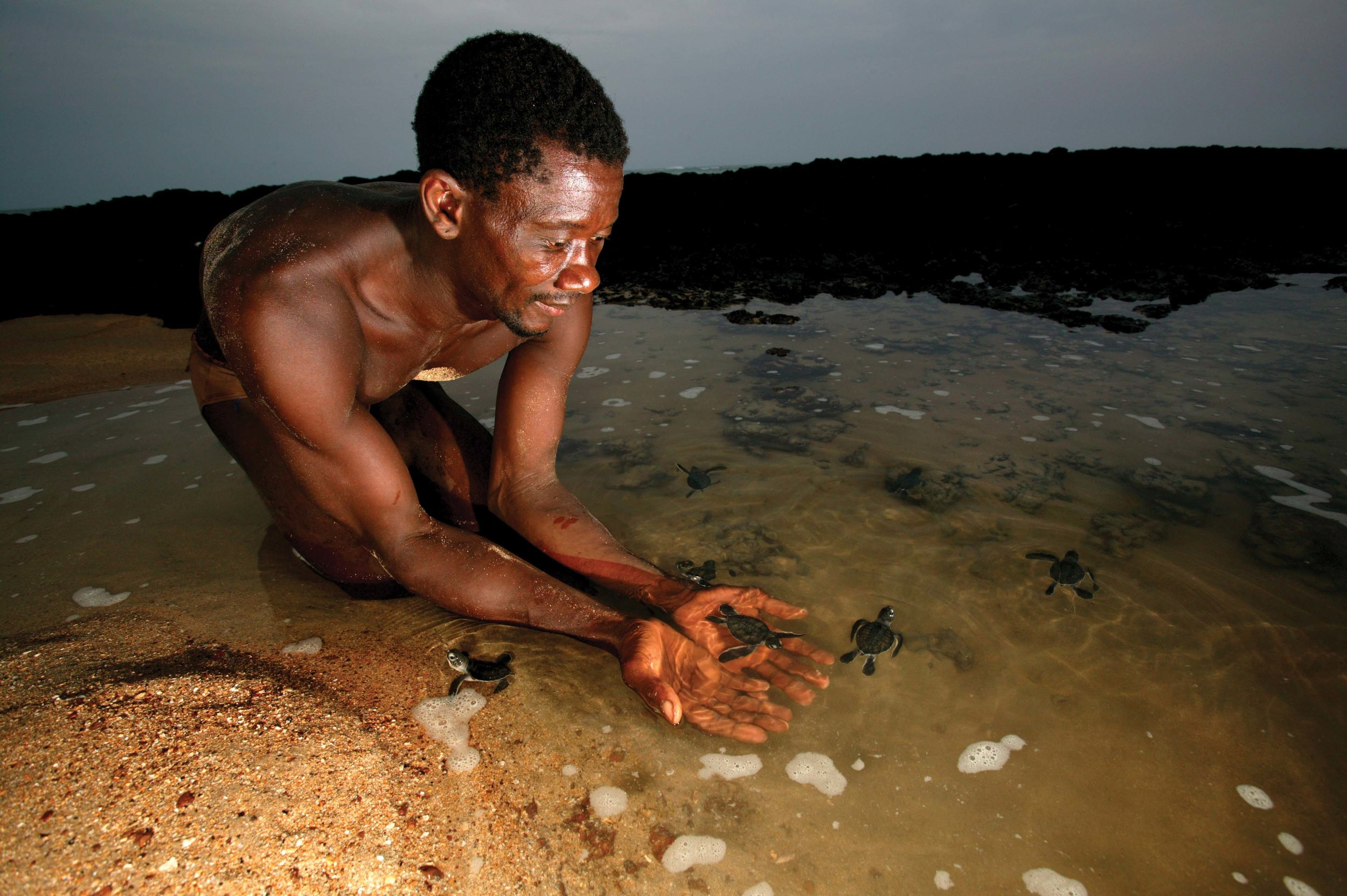 A local resident and ranger at João Vieira and Poilão National Park releases green turtle hatchlings on the island of Poilão in Guinea-Bissau. © J. F. HELIO AND N. VAN INGEN