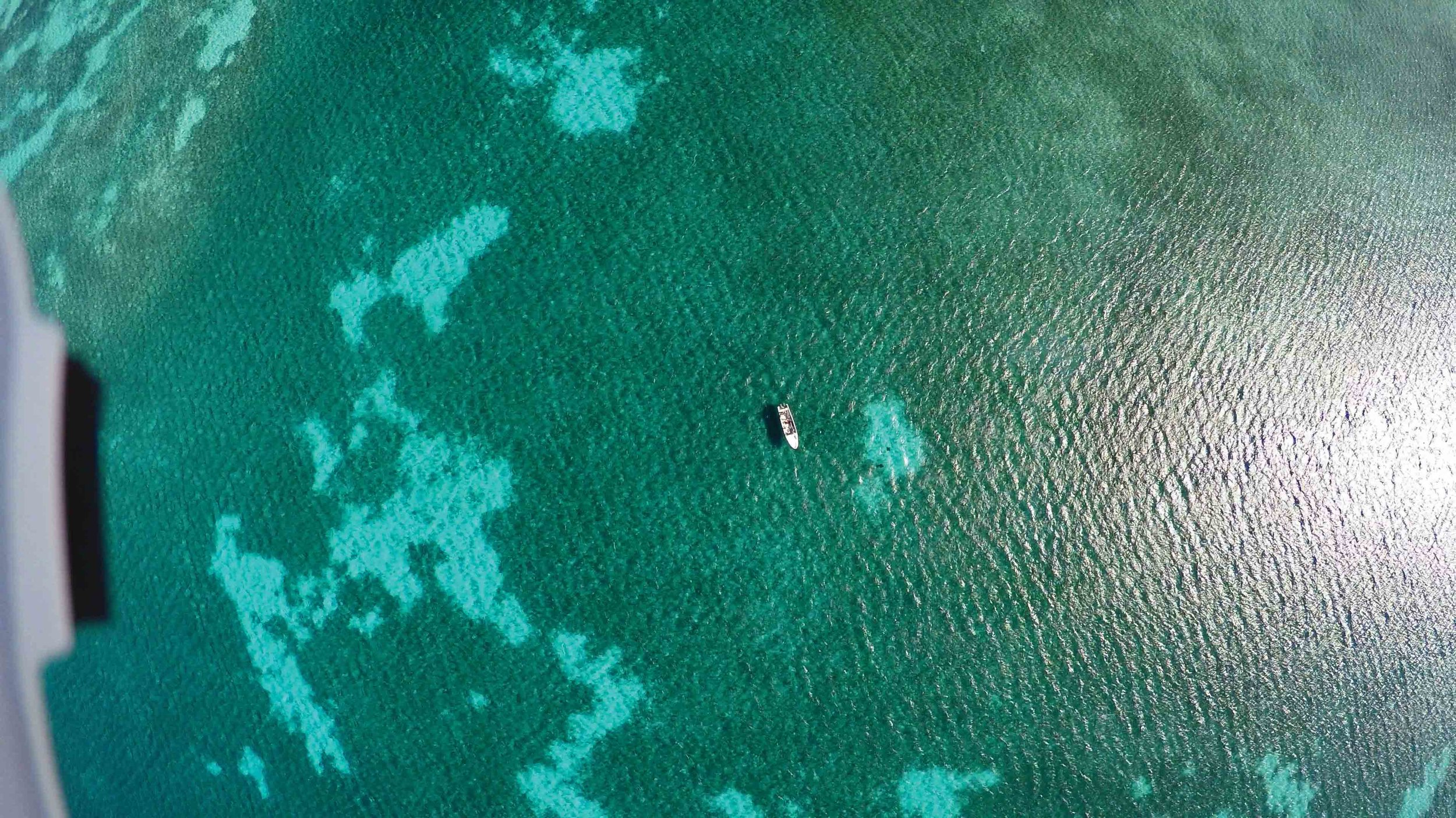 The researchers' boat can be seen above seagrass habitat in this image captured by a quadcopter drone during research in Turneffe Atoll, Belize. © ERIC ANGEL RAMOS