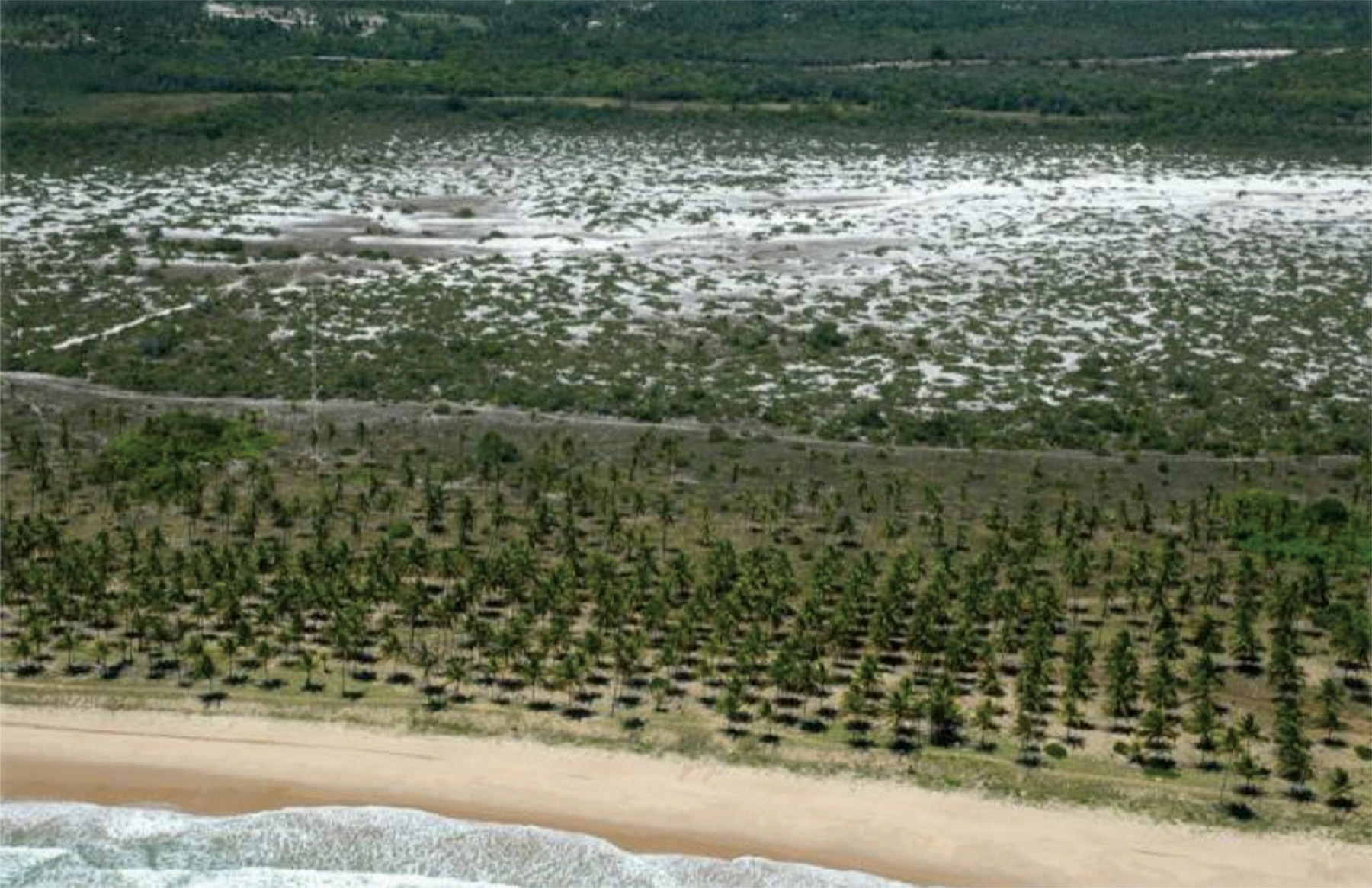 Aerial images of the coastline of northern Bahia, Brazil, in 2000 and 2008 show how the coastline has been developed over time from coconut plantations to resort tourism. © Projeto Tamar Image Bank