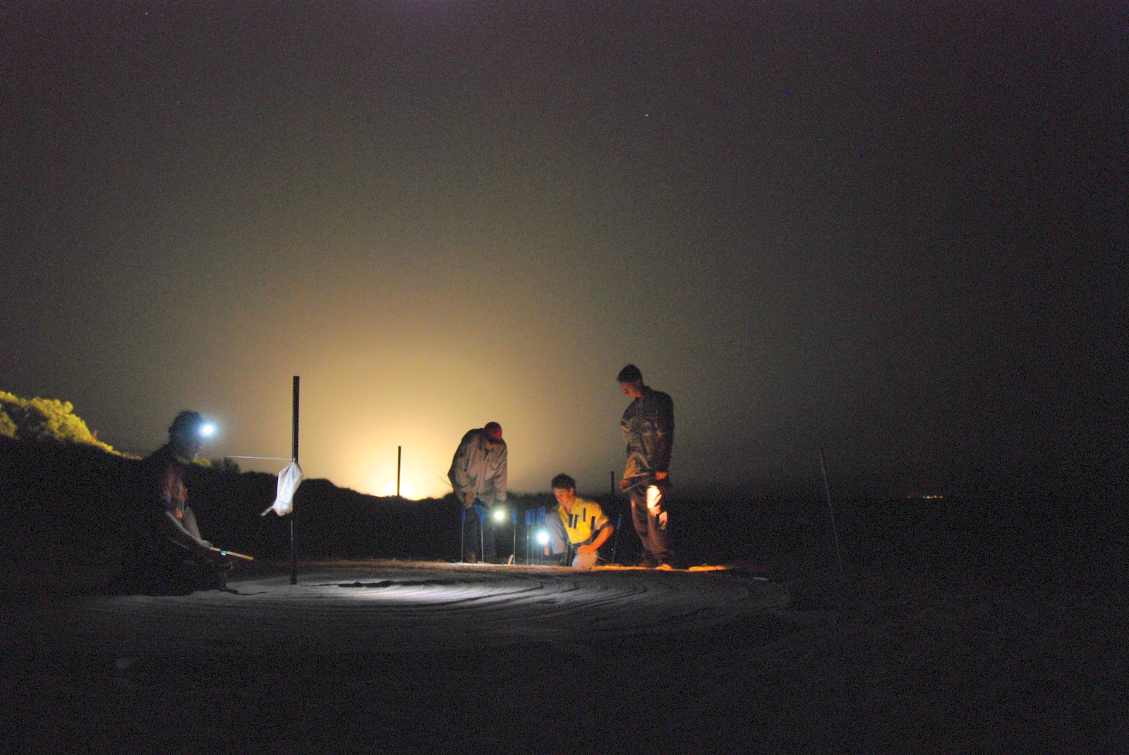 Field assistants test the orientation of hatchling flatback turtles in the presence of lights typically used by industry and in urban areas. The data from the study, which was conducted on Barrow Island, Australia, were used to establish a baseline to inform the Chevron Gorgon gas project. © Kellie Pendoley