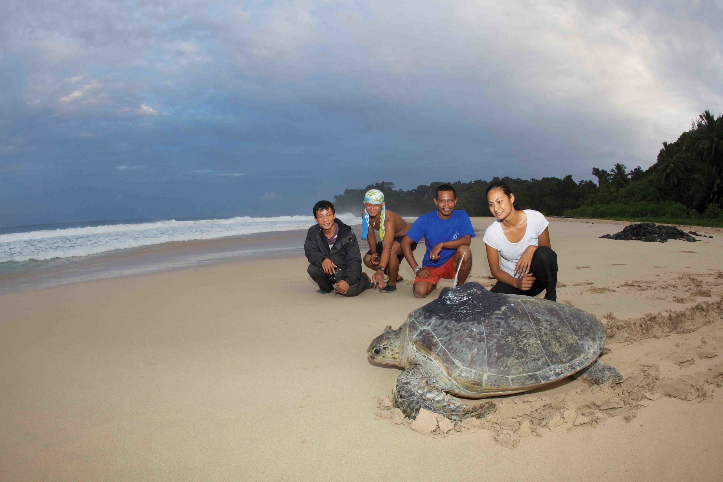 Author Maggie Muurmans releases a satellite tag–equipped turtle with local staff members. © David Robinson