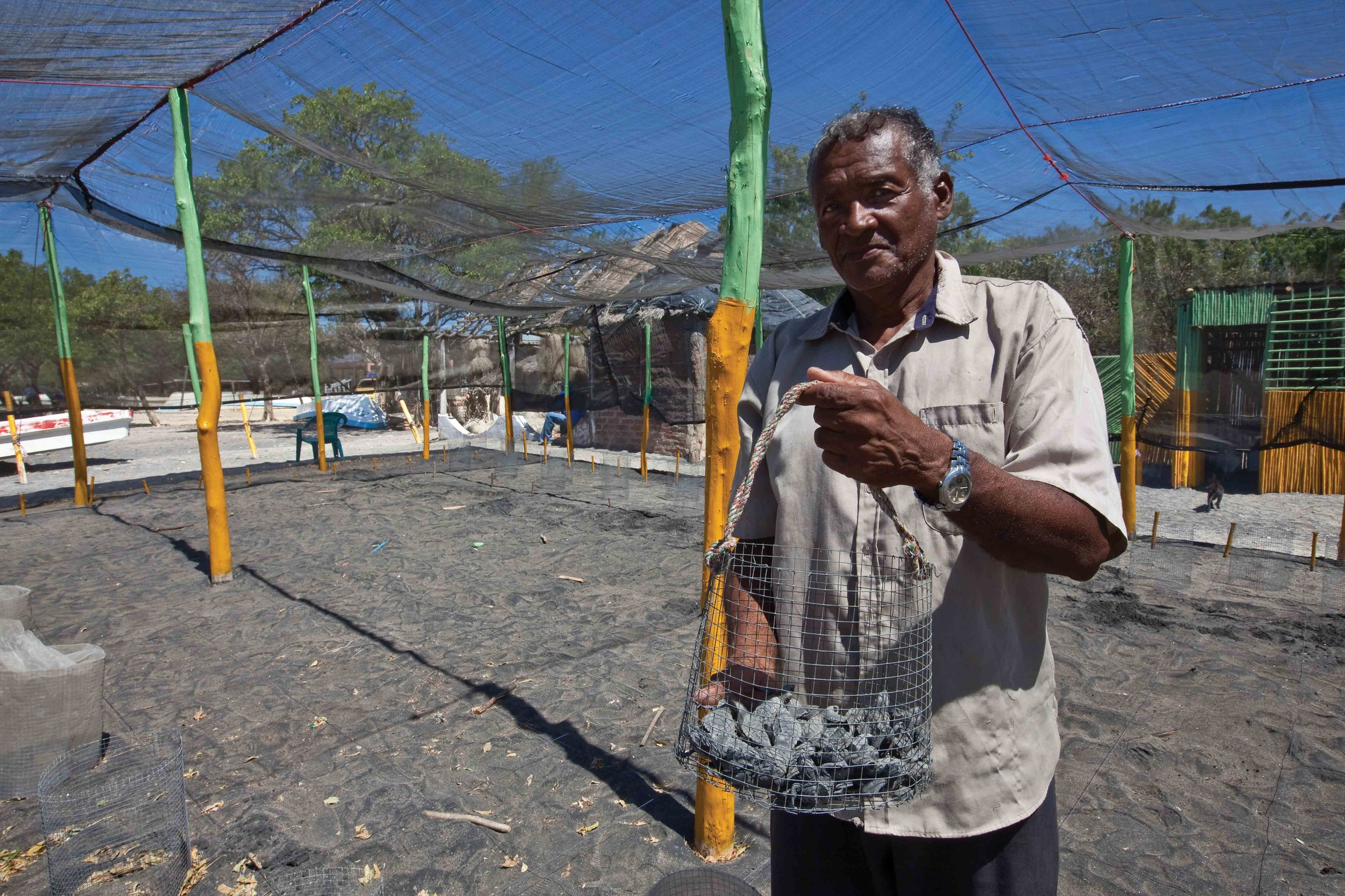 Don Justo holds a basket of newly hatched olive ridley turtles inside the hatchery at El Astillero on Nicaragua's Pacific coast. The hatchery was constructed by the community in collaboration with Fauna and Flora International and MARENA as part of a project that employs community members to collect turtle eggs for conservation. © Brian J. Hutchinson