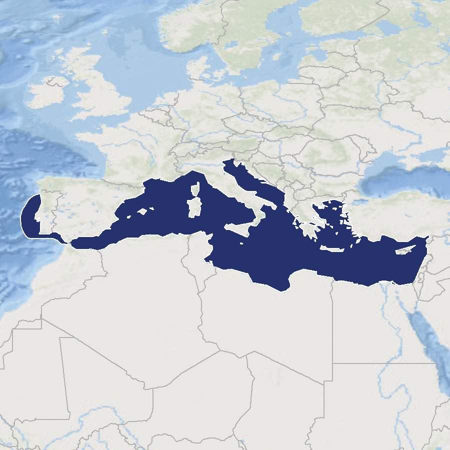 1-Mediterranean_CMYK copy.jpg