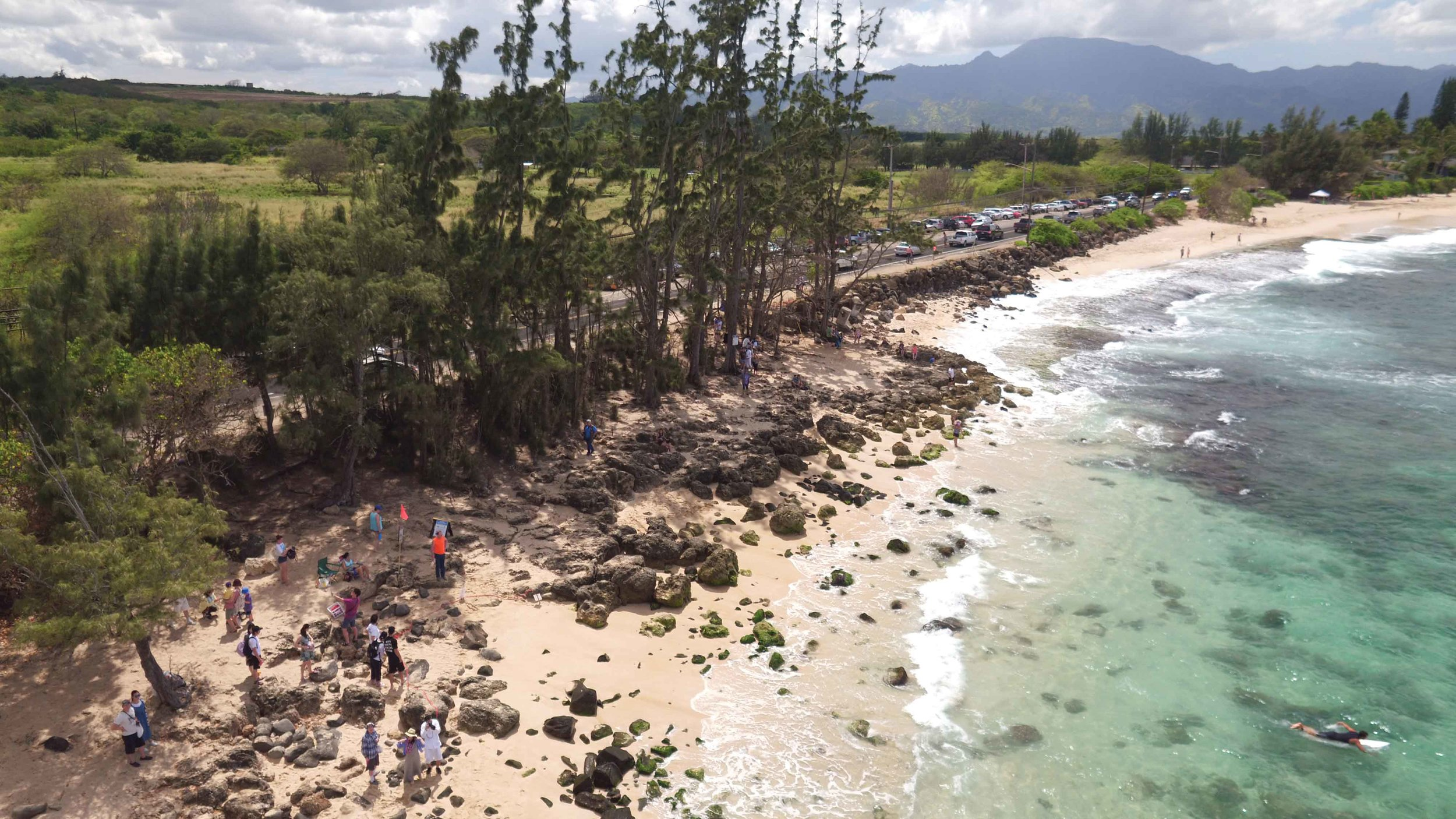 An aerial view of Laniakea Beach on the North Shore of Oahu, Hawaii, shows how people stopping to watch a basking turtle contributes to traffic on the adjacent two-lane highway. © PAUL JAVIER