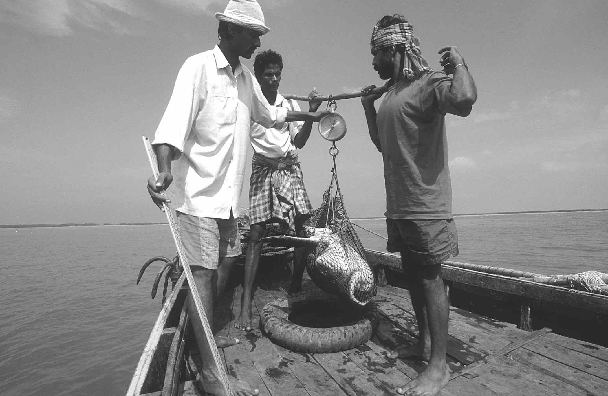 A field team weighs an olive ridley in Gahirmatha, state of Orissa, India. © Bivash Pandav