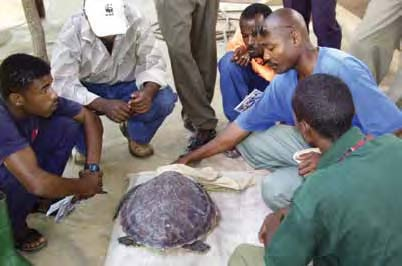 Kenyan fishermen learn about sea turtles during a LOT-WTW education program. © LOT-WTW
