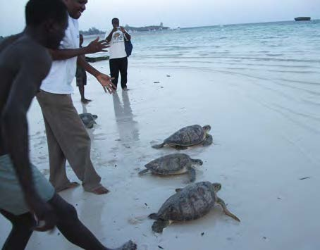 After participating in awareness and capacity-building meetings run by COBEC, Kenyan fishermen release turtles that they would have previously slaughtered. © COBEC
