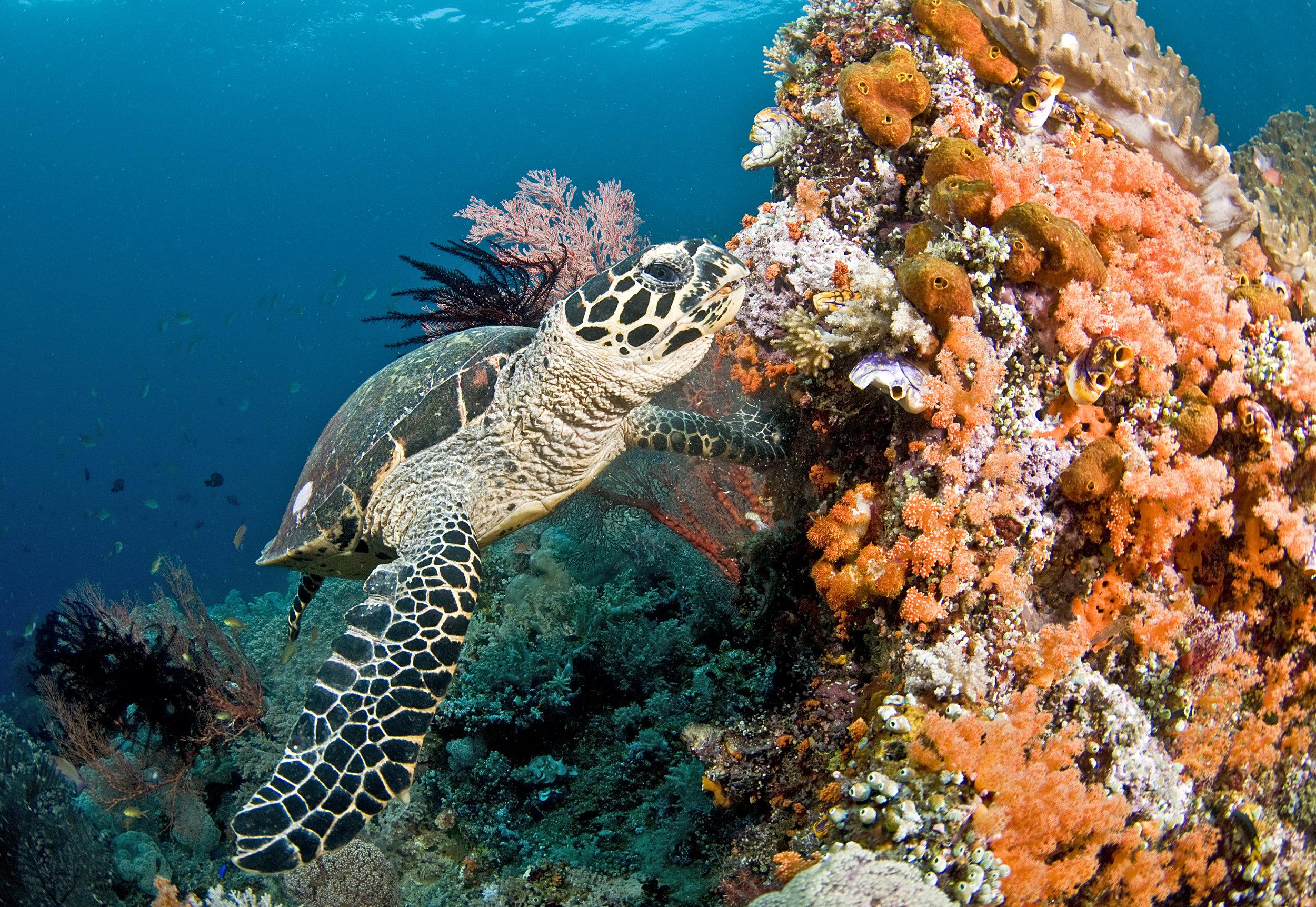 © Jayne Jenkins / Coral Reef Image Bank