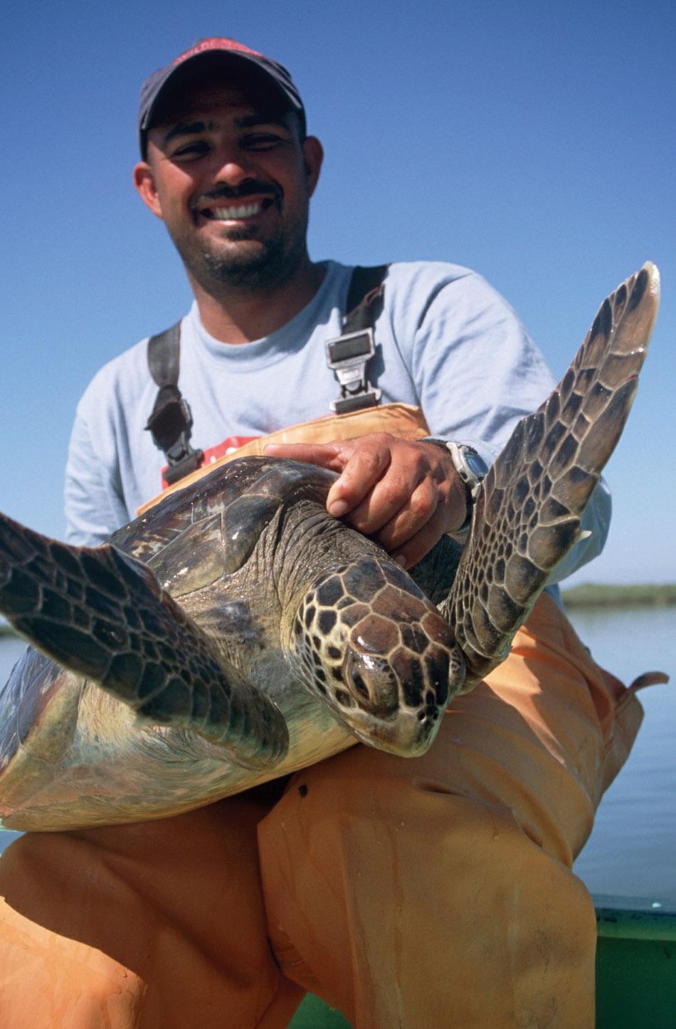 Rodrigo Rangel, Grupo Tortuguero Coordinator, releases a black turtle in Bahia Magdalena, Baja California Sur, in March 2003. © W. J. NICHOLS