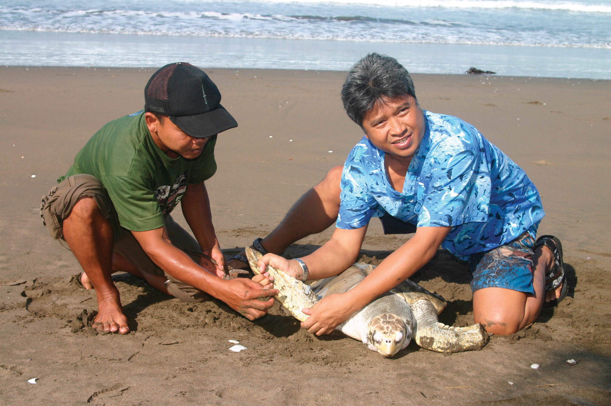 Ketut Putra tags an olive Ridley in Alas Purwo National Park, Indonesia, before releasing it to the ocean. © AMALIA FIRMAN / CONSERVATION INTERNATIONAL