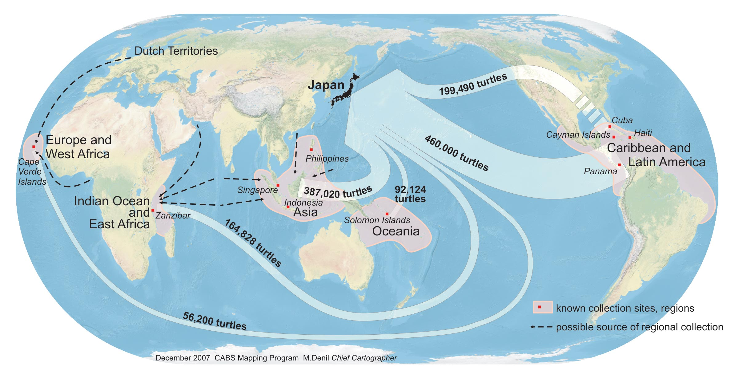 """Hawksbill shell has been traded throughout the world for millennia. The Japanese have figured prominently in the trade of this commodity, which they call """"bekko."""" The figure above depicts Japanese bekko imports from 1950 to 1992, using Japanese customs statistics. Japan was the world's major importer of hawksbill shell during the 20th century; its imports did not cease until the end of 1992. Major locations of export in each region are marked with red dots. Data on bekko volume were compiled and converted to approximate numbers of turtles from Japanese government trade statistics (from Mortimer and Donnelly's forthcoming IUCN Hawksbill Red List Assessment)."""