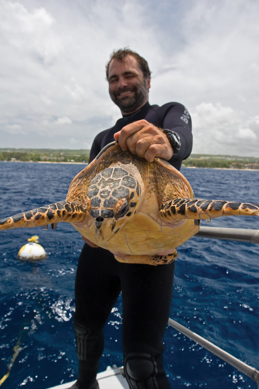 Barry Krueger prepares to release a hawksbill turtle after conducting research aboard a dive boat in Barbados. © Brian J. Hutchinson