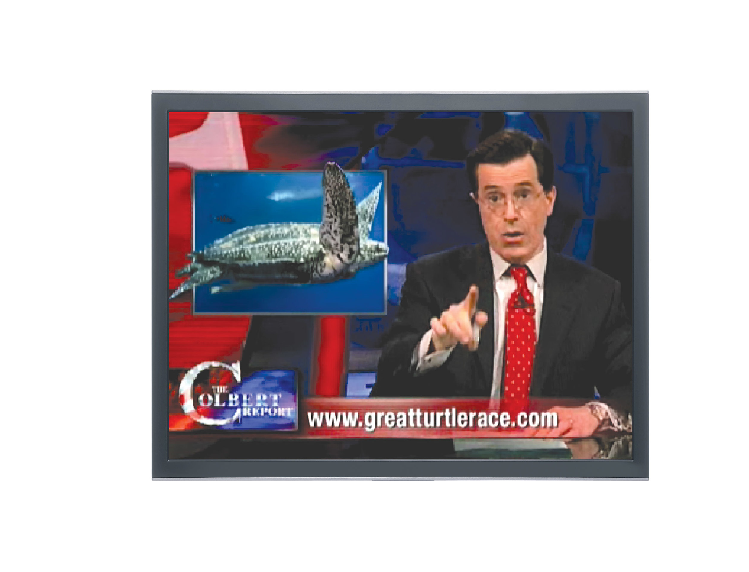 "Each time Stephen Colbert included the Great turtle race in his comedy sketches on ""The Colbert Report,"" website hits at www.greatturtlerace.com skyrocketed."