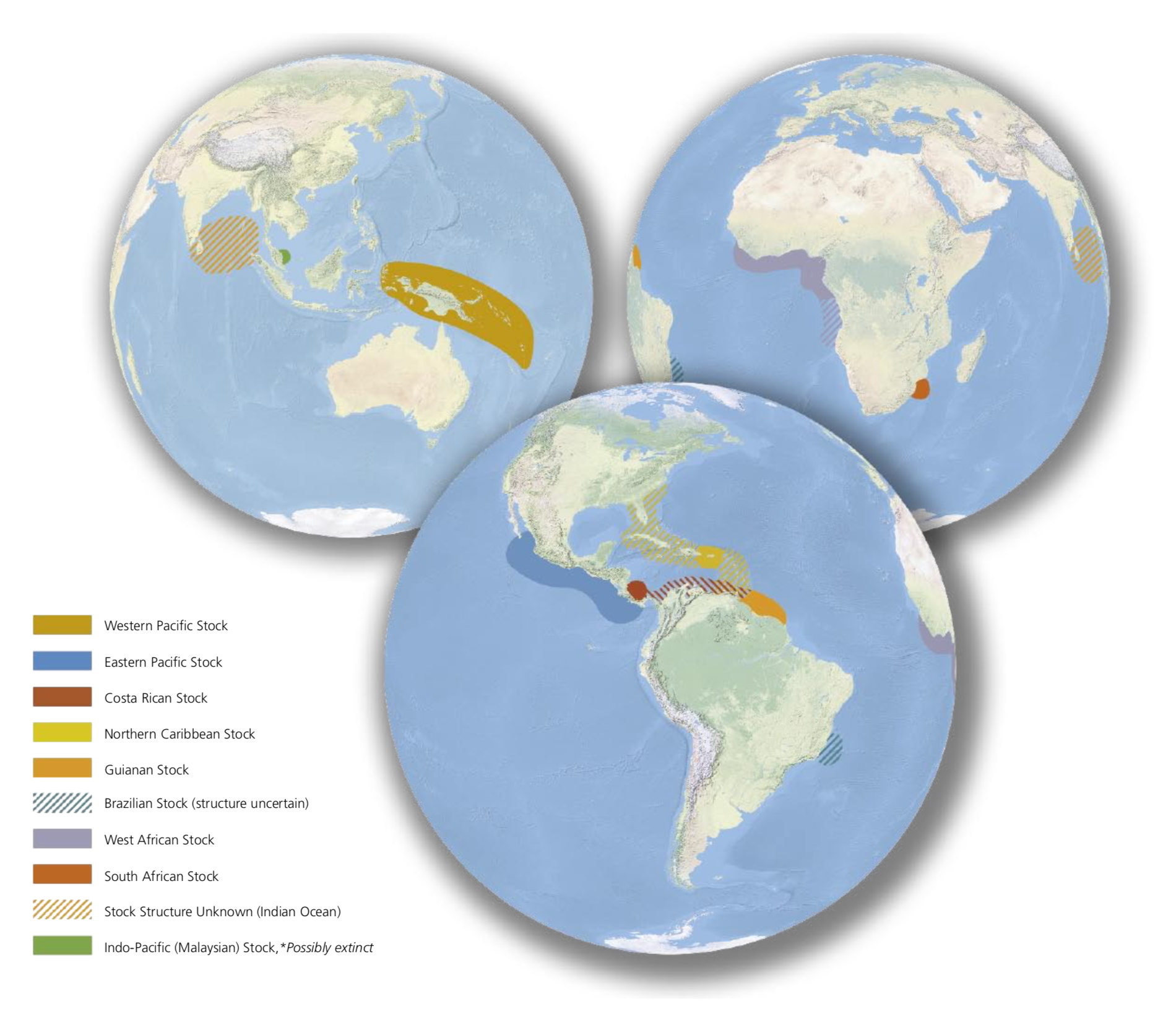 This figure shows the known genetic stocks for leatherback sea turtles. Solid colors indicate the location of major rookeries for known distinct genetic stocks, while the hatched colors mark rookeries for which the genetic stock is not yet fully defined or its boundaries unclear. One distinct stock, in Malaysia, may no longer exist, and the genetic structure of rookeries in the Indian Ocean remains unknown. © CONSERVATION INTERNATIONAL AND ROWE DESIGN HOUSE
