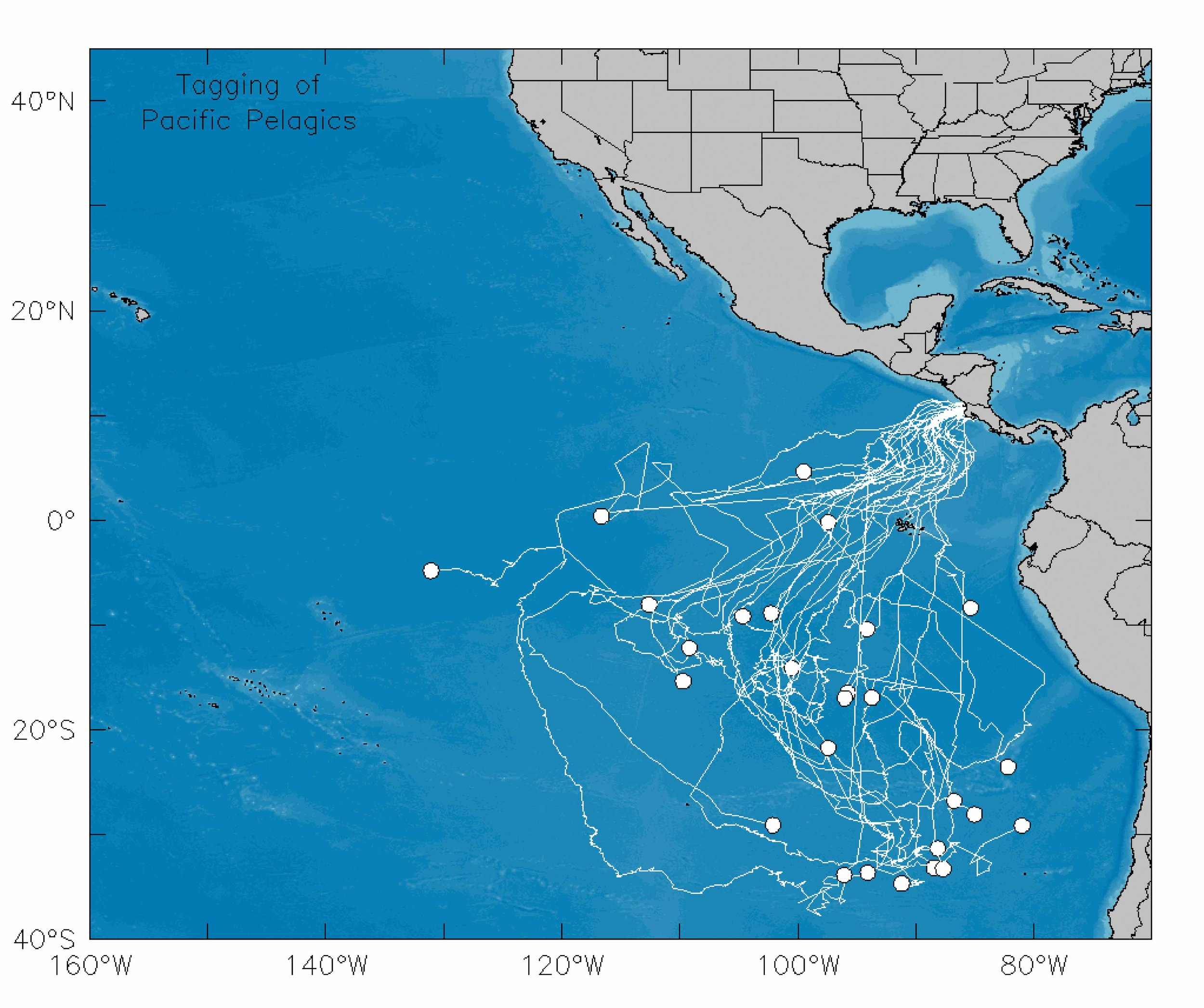 By use of satellite transmitters, researchers have tracked 50 leatherbacks' movements around the Pacific Ocean. © TAGGING OF PACIFIC PELAGICS (TOPP)