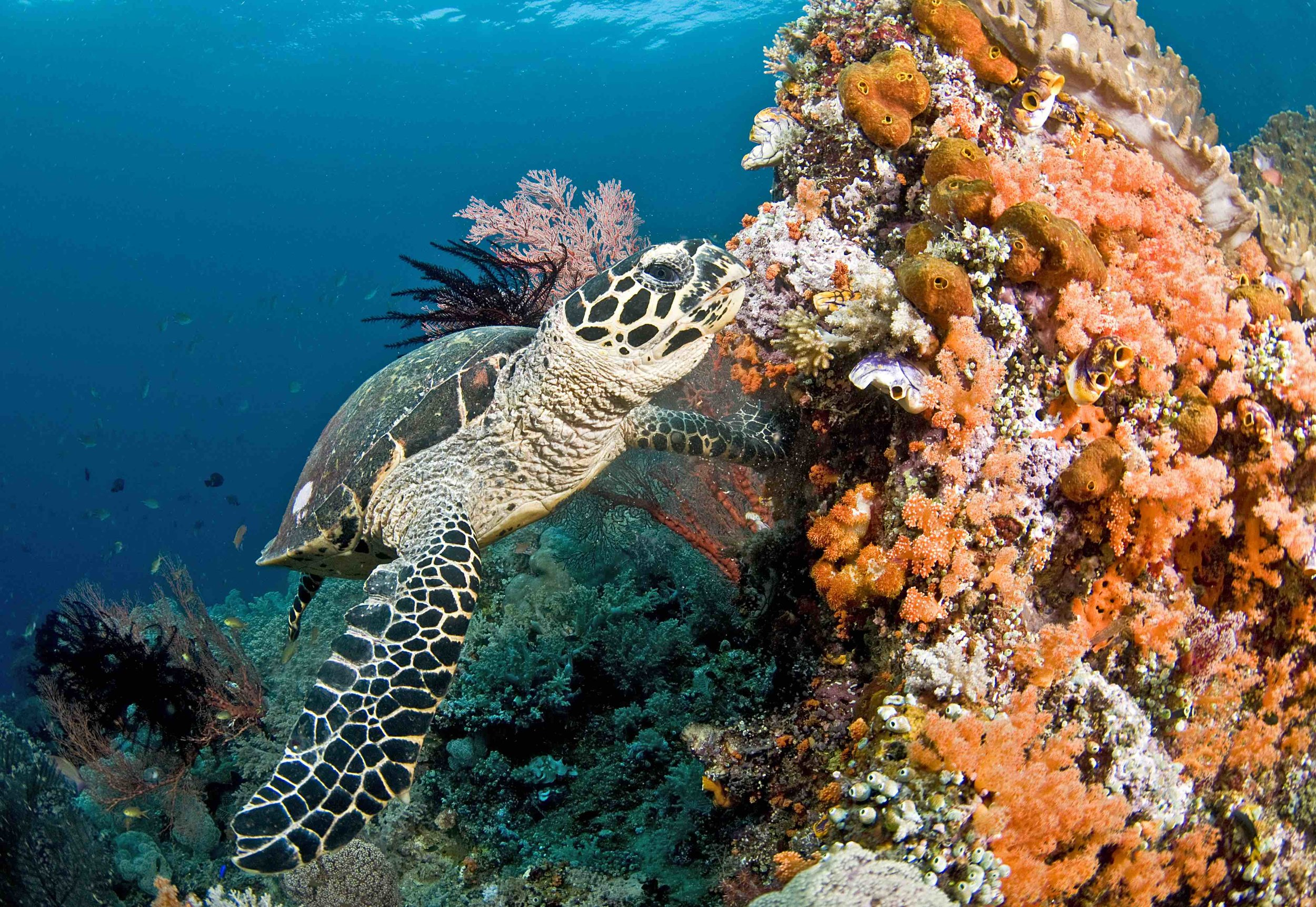 Turtle in the Maldives, May 2016 © JAYNE JENKINS / CORAL REEF IMAGE BANK