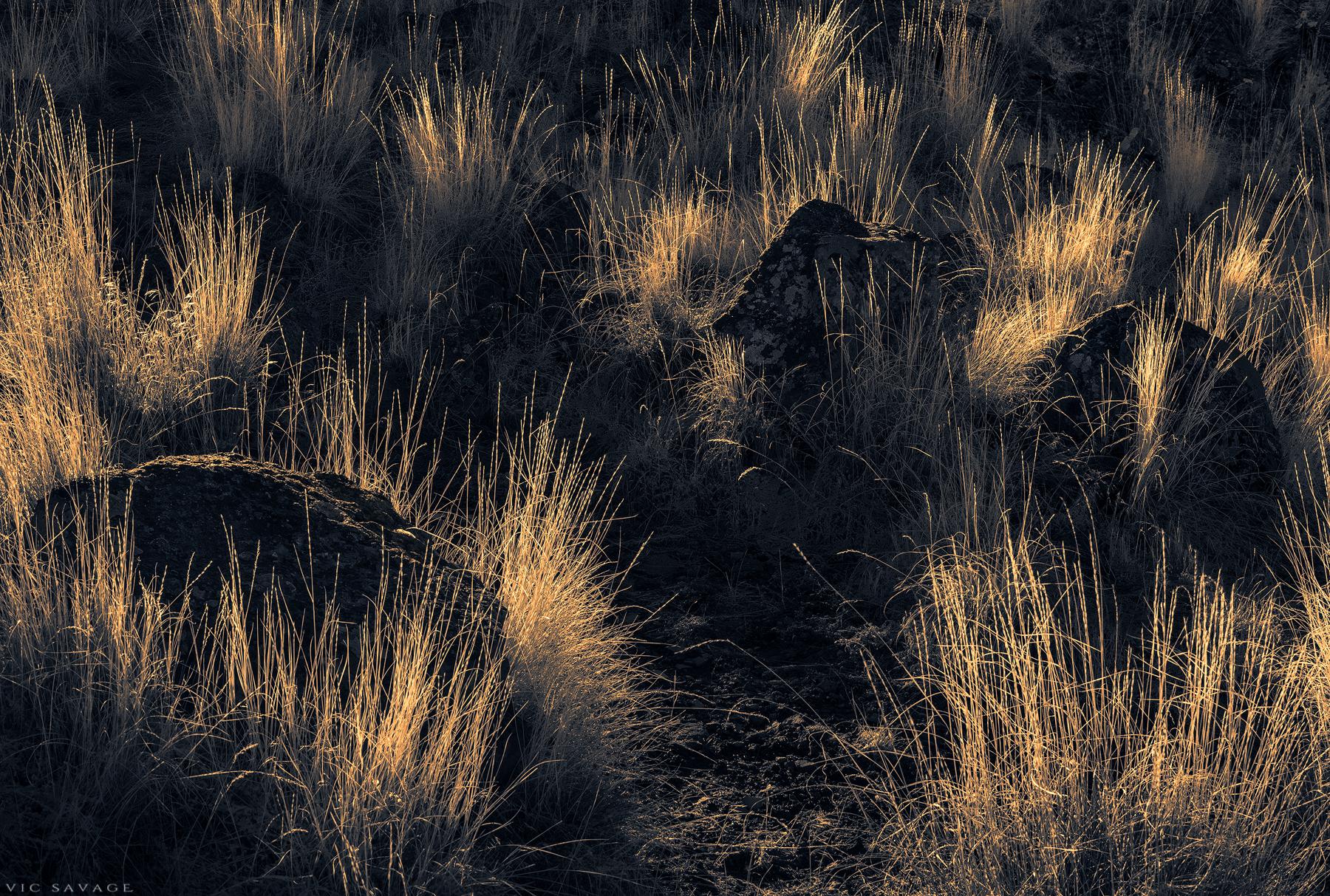 Light Weeds
