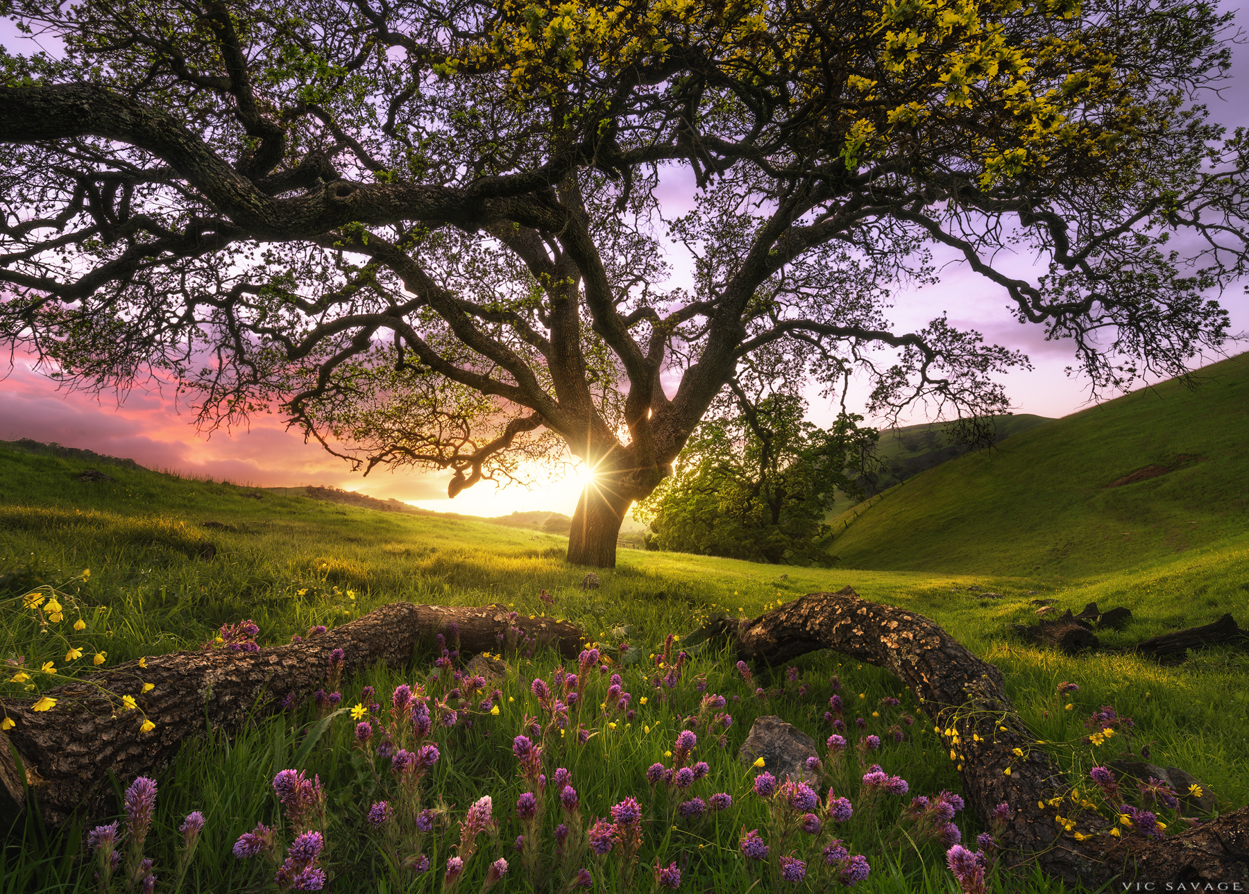 Garden of Sunol