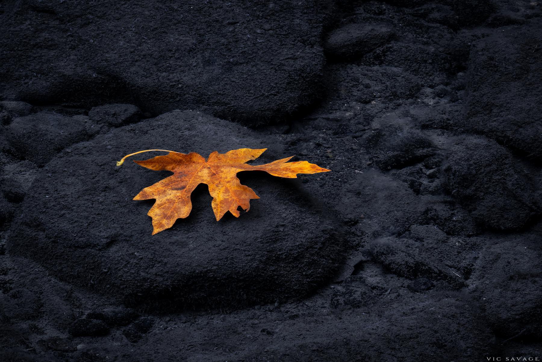 Yellow-Leaf.jpg