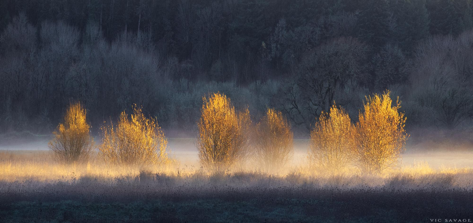 Light-Bushes.jpg